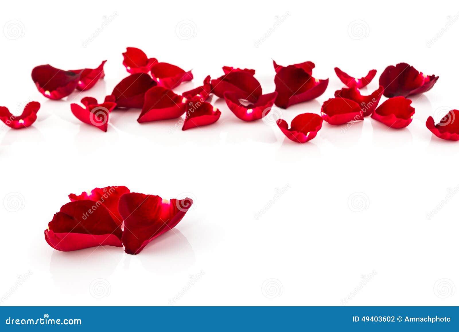 P tale de rose de rouge photo stock image du romantique - Petale de rose bain ...