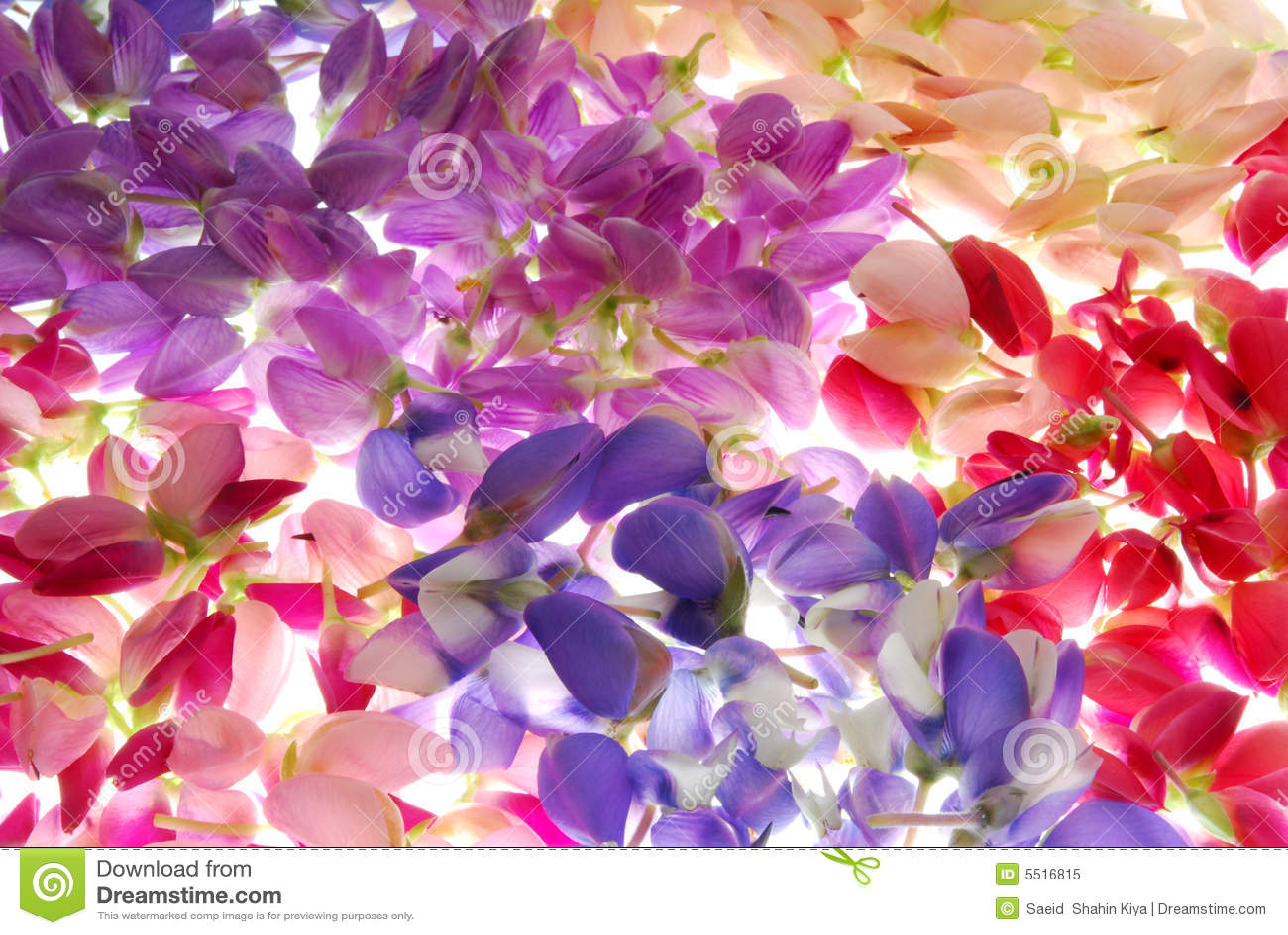 Pétales colorés de fleur