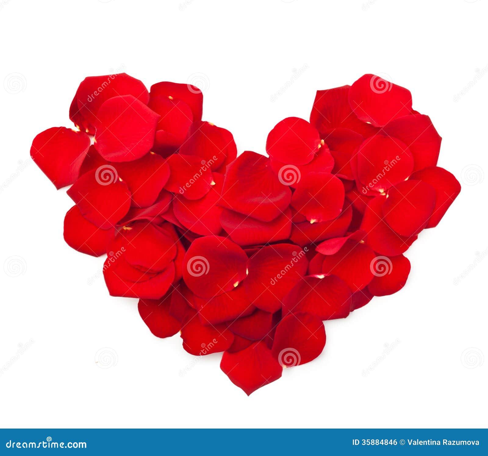 Petales De Fleur De Rose De Rouge Photo Stock Image Du Rosee