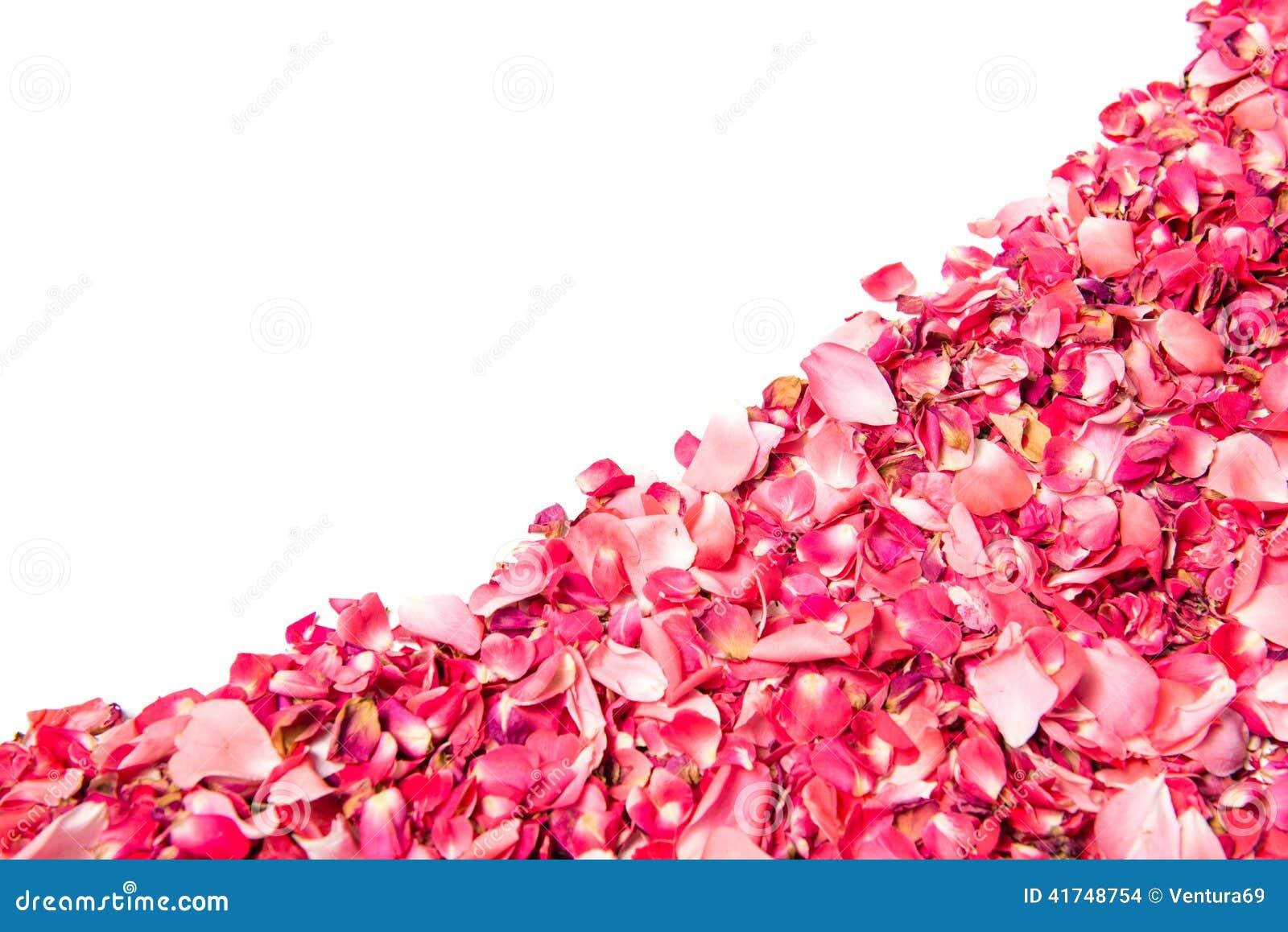 p tales de rose roses au dessus du fond blanc photo stock image 41748754. Black Bedroom Furniture Sets. Home Design Ideas