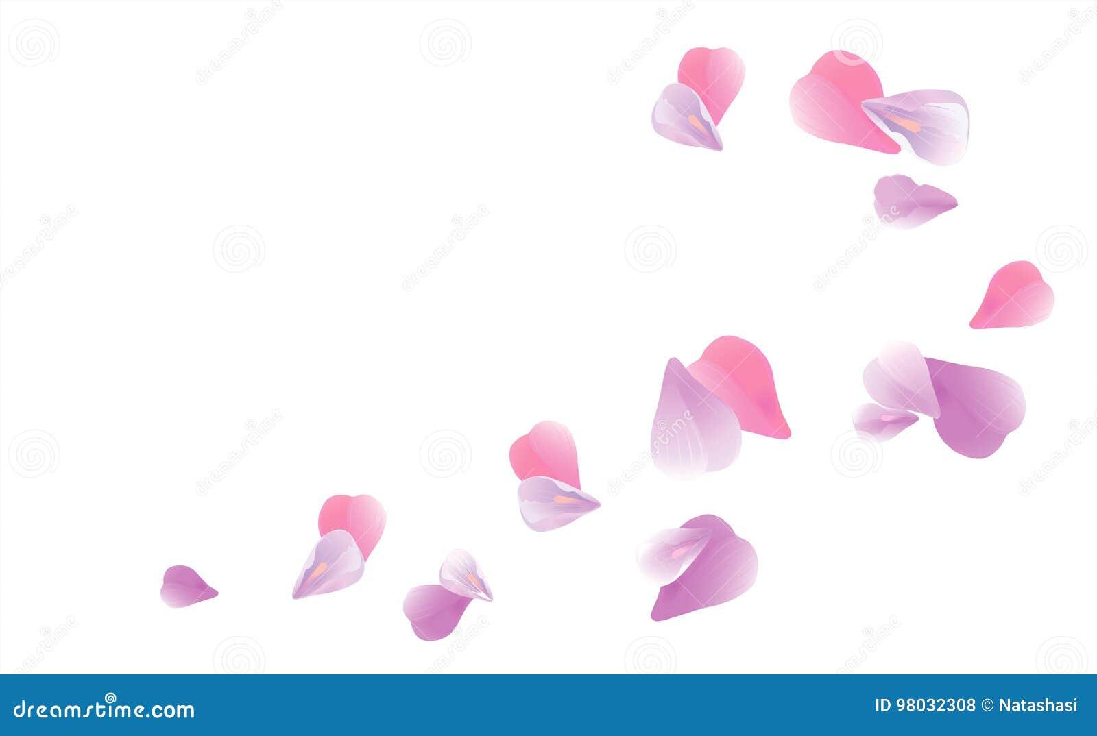 Petales Pourpres Rose Clair Volants D Isolement Sur Le Fond Blanc