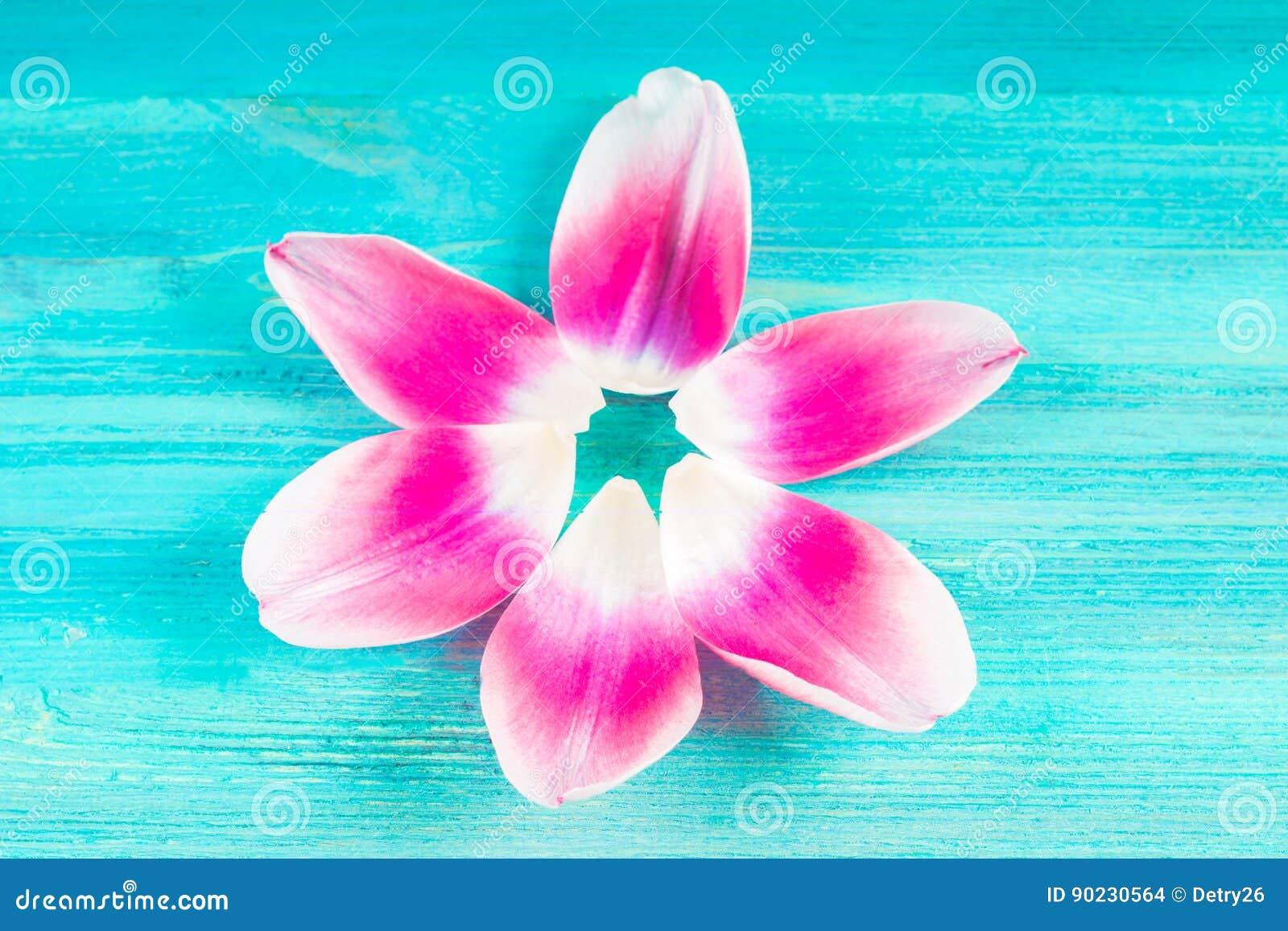 Fleur De Sous Bois Bleue pétales roses d'une tulipe sous forme de fleur sur un fond