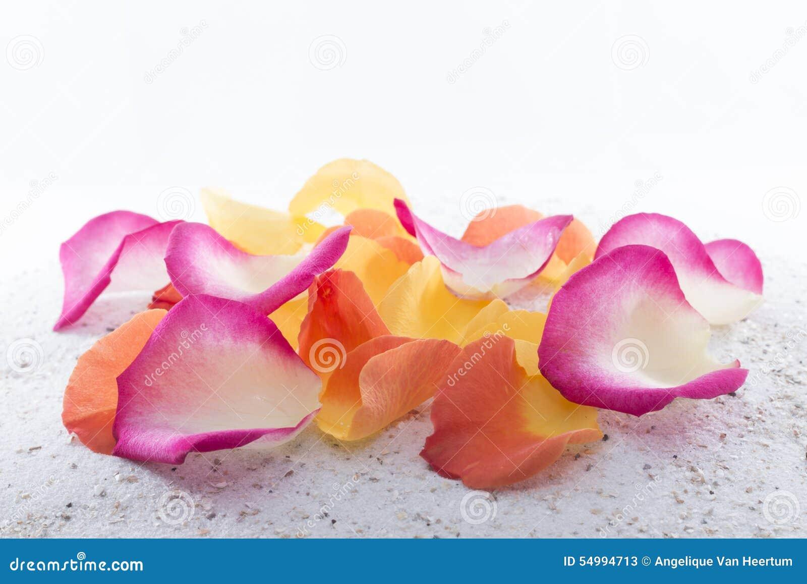 Pétalos color de rosa