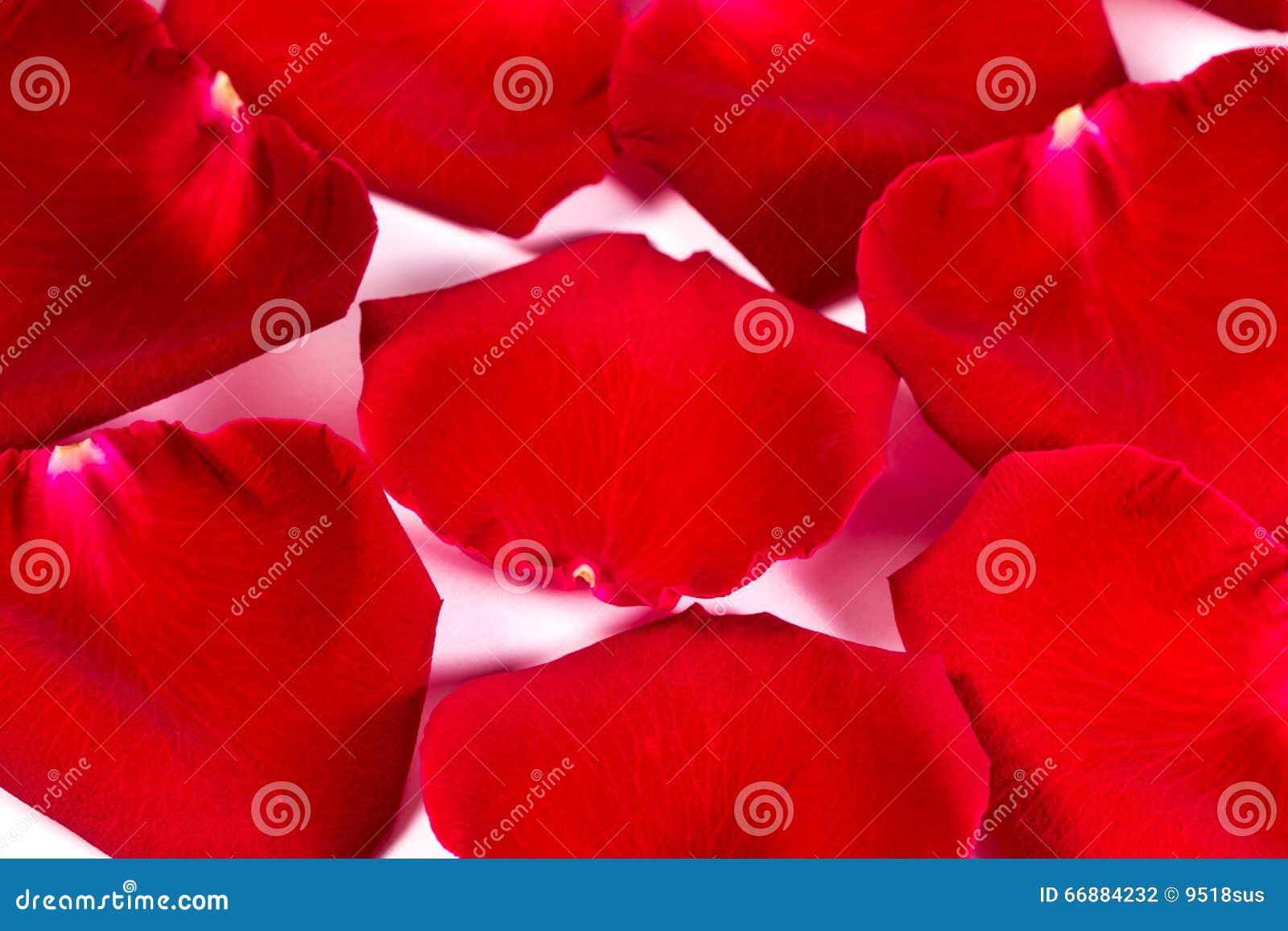 Pétalos color de rosa de seda rojos