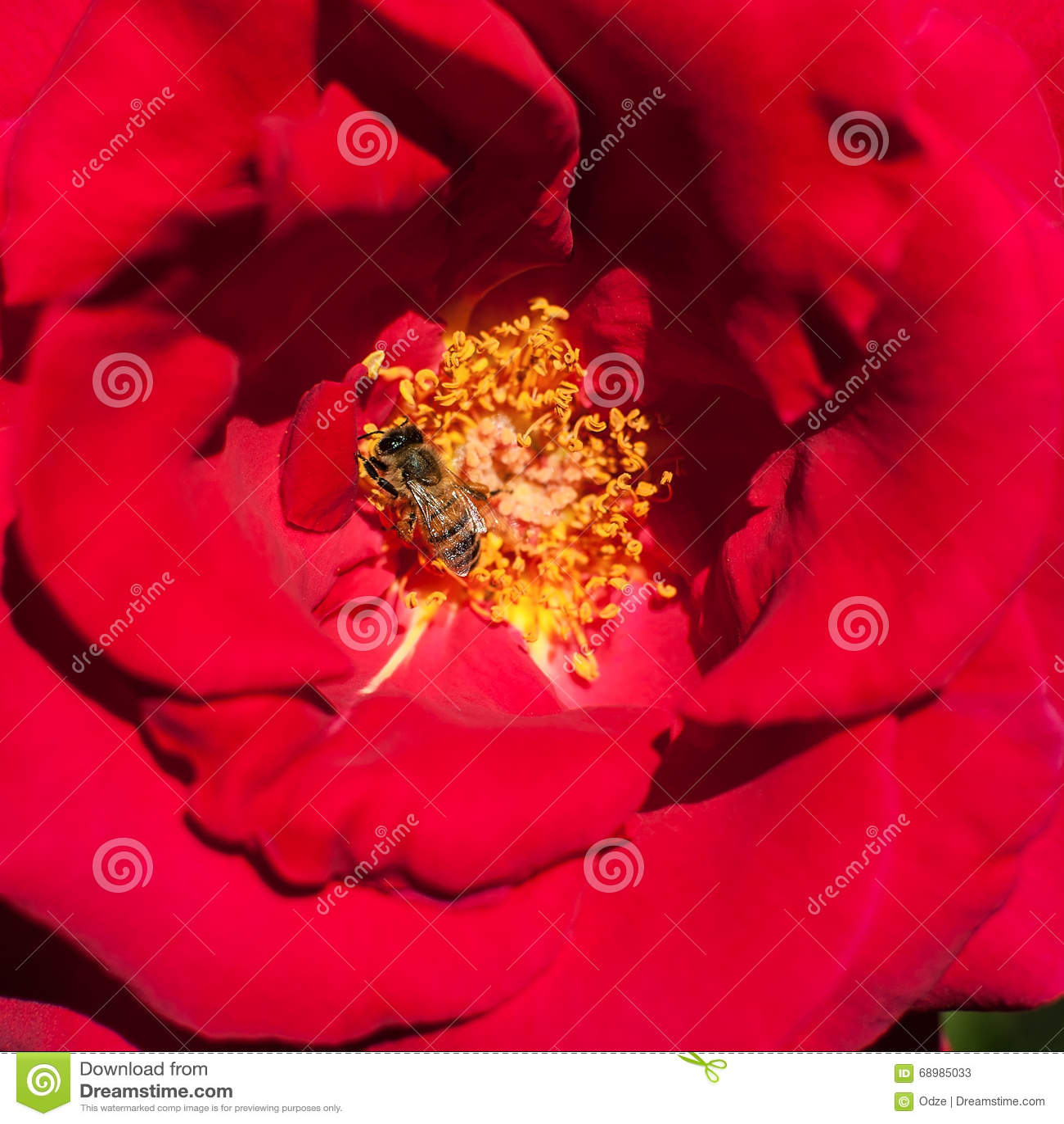 Pétalos color de rosa y estambres rojos