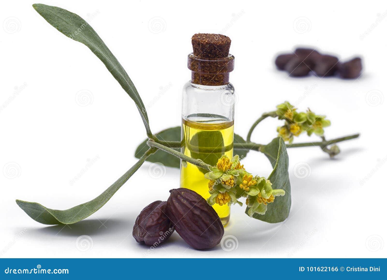 Pétrole, feuilles, fleur et graines chinensis de Simmondsia de jojoba