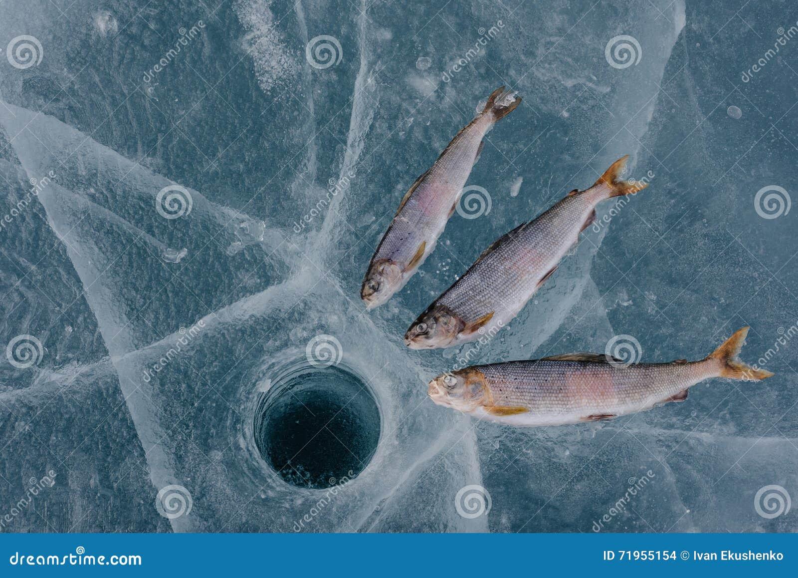 Pêche de l hiver sur le lac