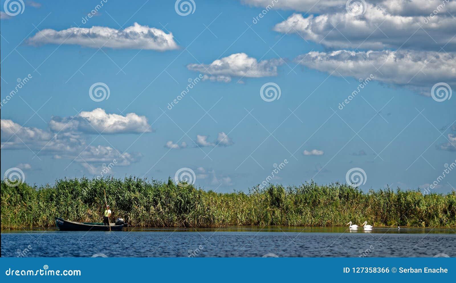 Pêcheur et pélicans sur le delta de Danube