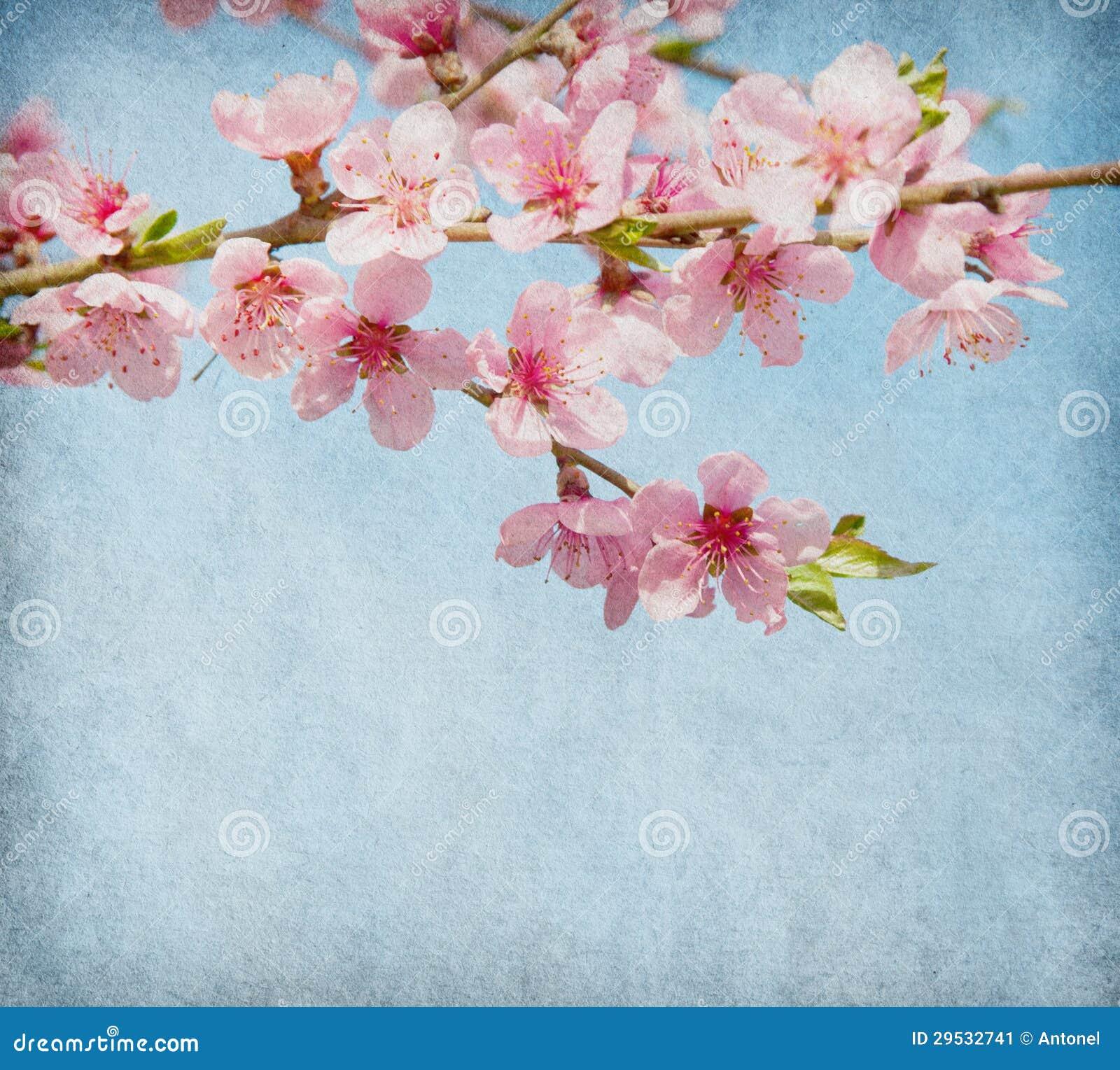 Pêssego na flor