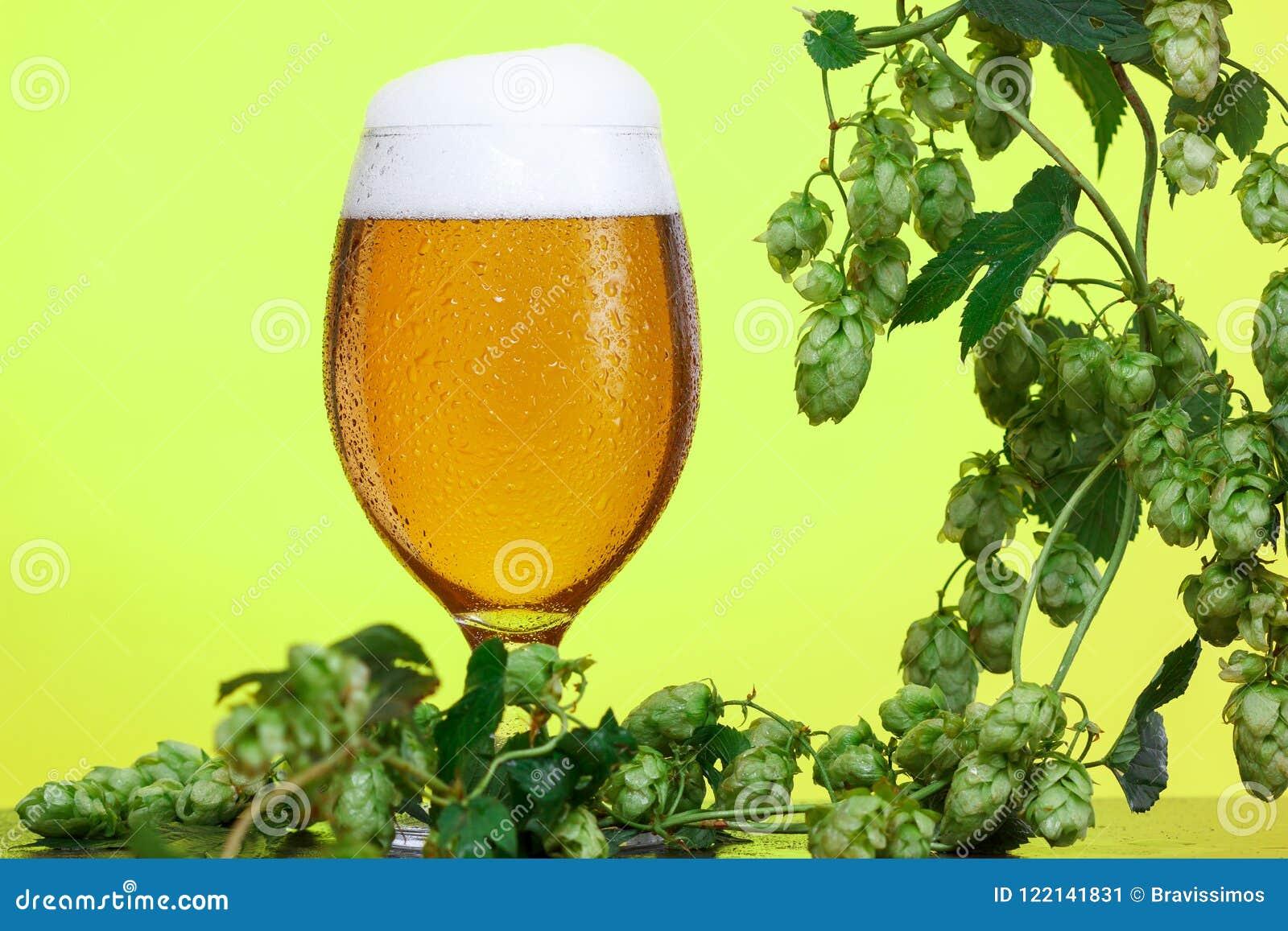 Pół kwarty piwo z składnikami dla domowej roboty piwa na kolorze żółtym