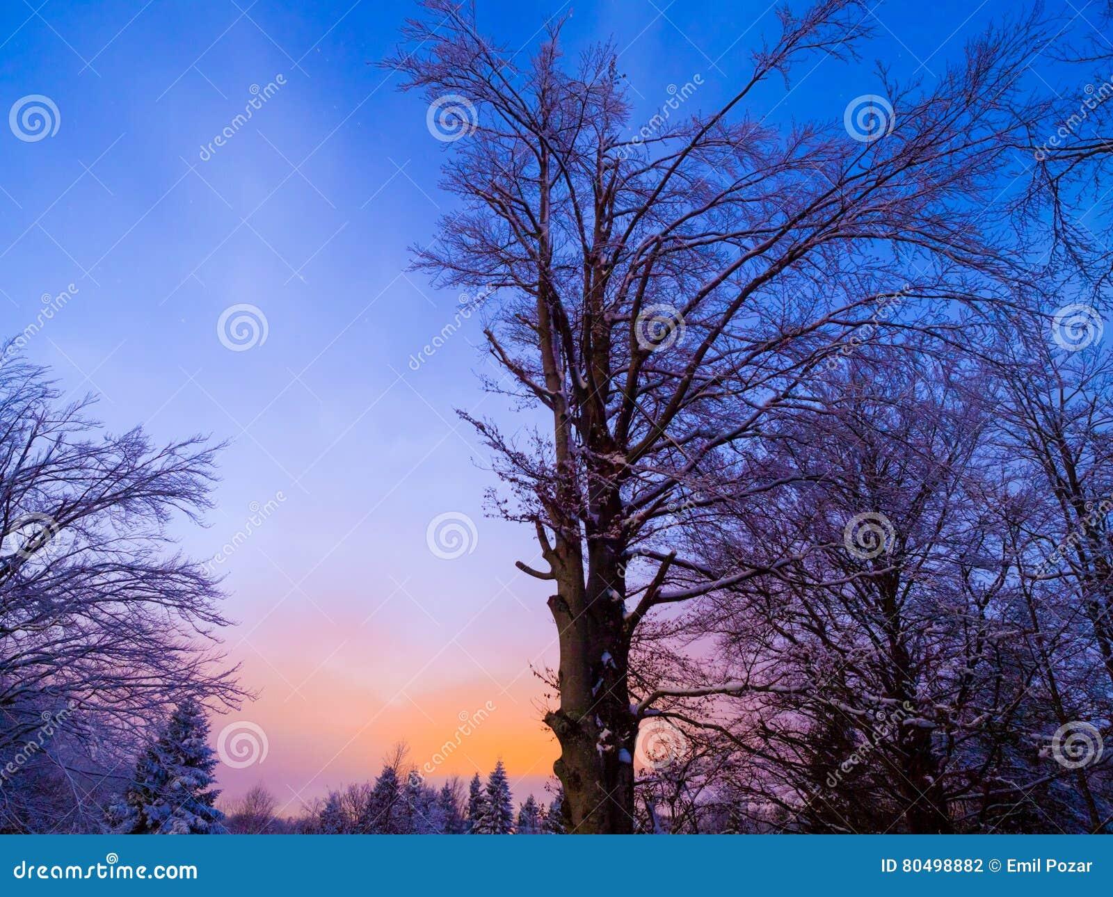 Półmrok sceniczni drzewa silhouetting