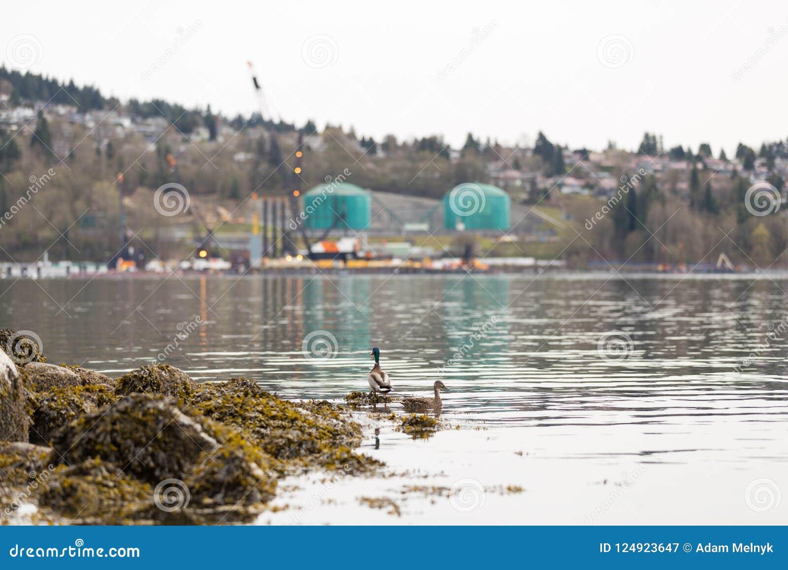 PÓŁNOCNY VANCOUVER, BC, KANADA, APR -, 09, 2018: Zbiornikowiec do ropy blisko Parkland tankuje rafinerię