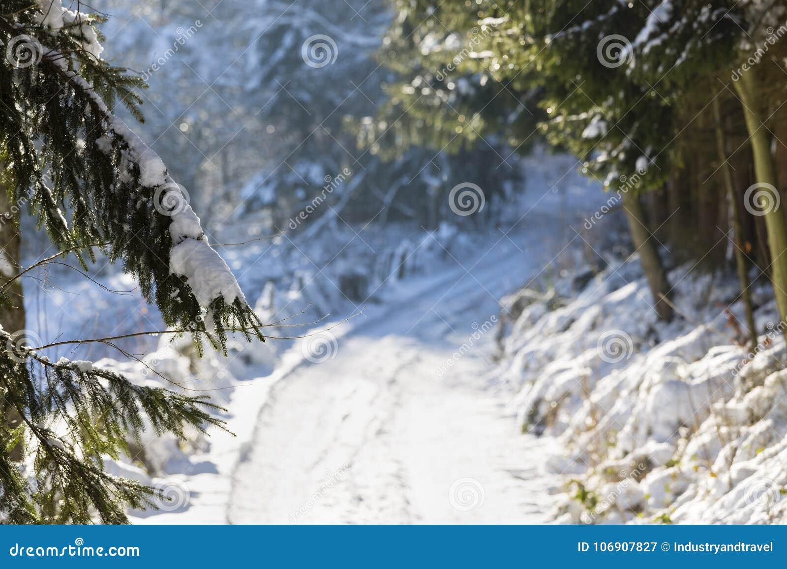 Północny Eifel las W zimie, Niemcy