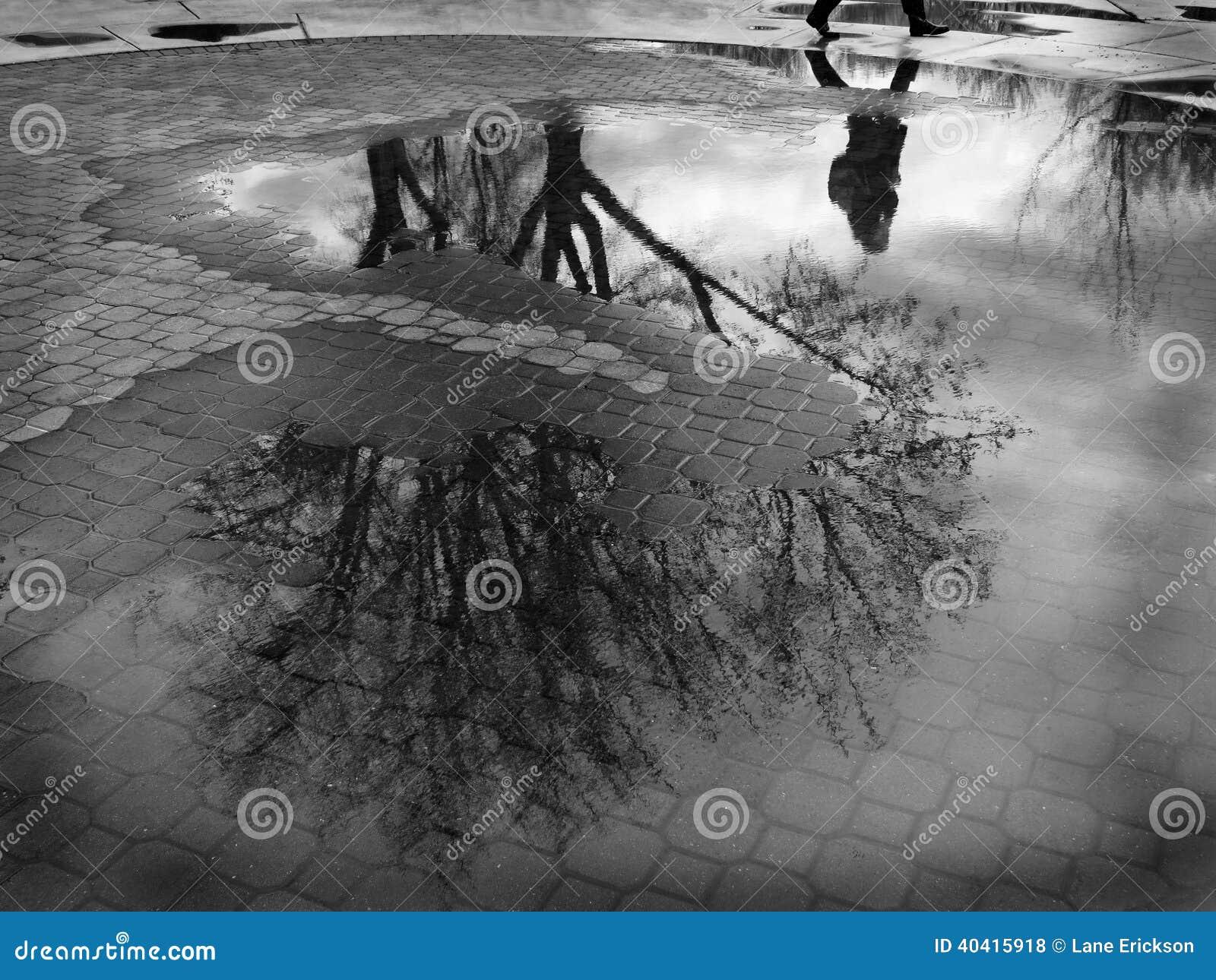 Pölreflexion av trädet och Person Walking Cobblestone