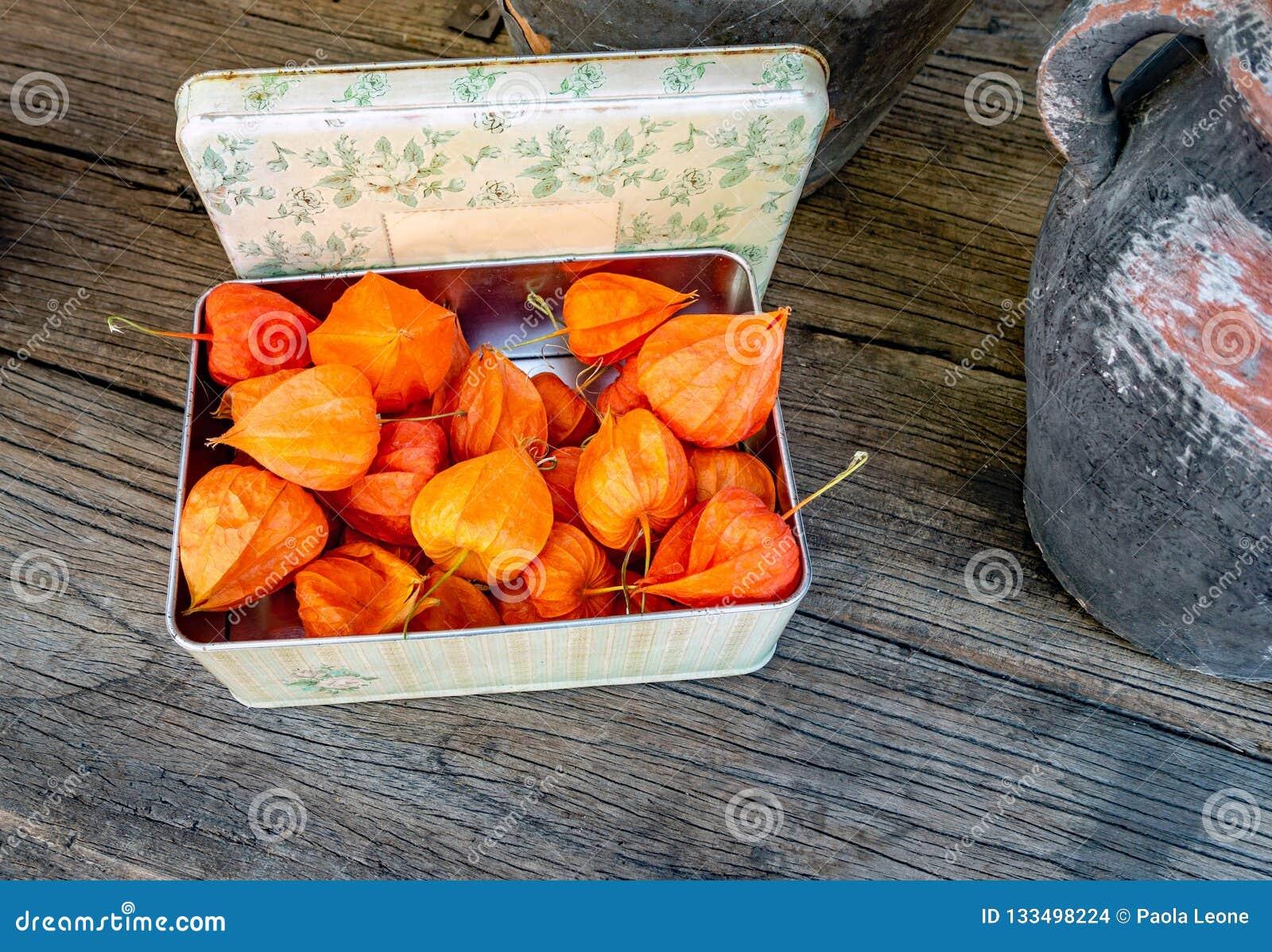 Pęcherzyca - Chiński lampion - w pudełku na Nieociosanym Drewnianym stole