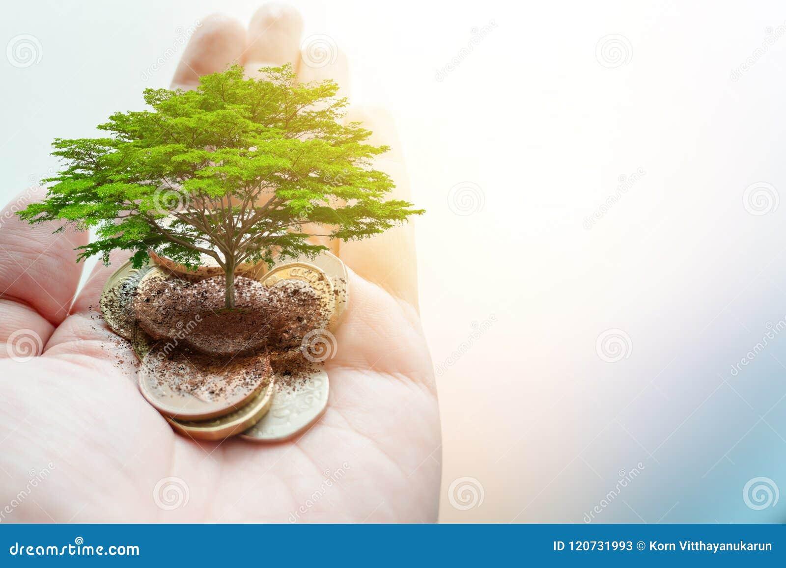 Płaci pieniądze darowiznę dla zielonego eco oszczędzania środowiska i uziemia ekologię podtrzymywalną