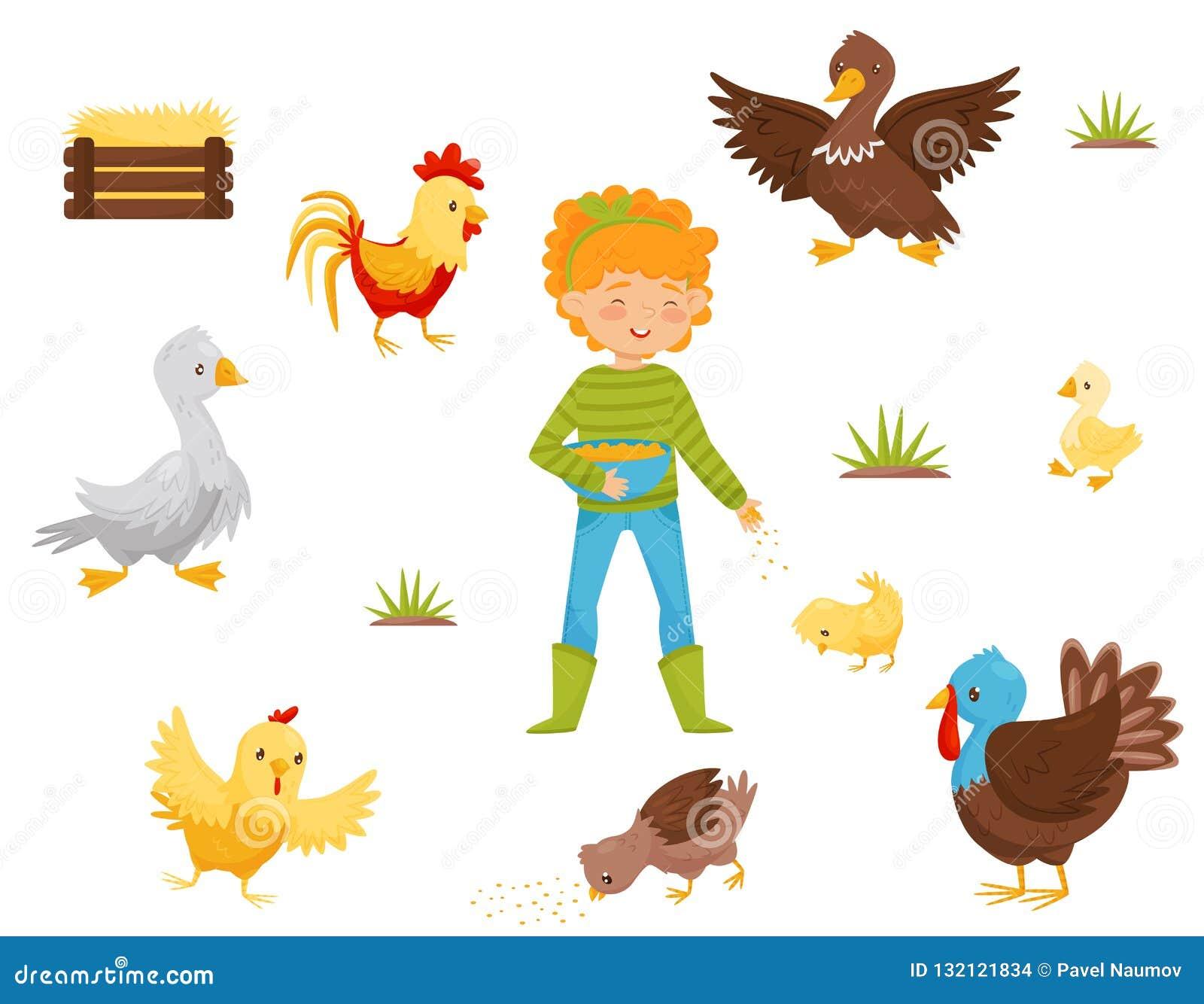 Płaski wektorowy ustawiający rolni ptaki, kurczaka gniazdeczko i dziewczyna z pucharem adra, ptactwo domowe Rolnictwo temat