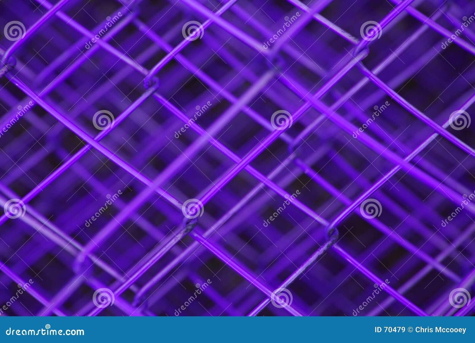 Płotowe purpurowy