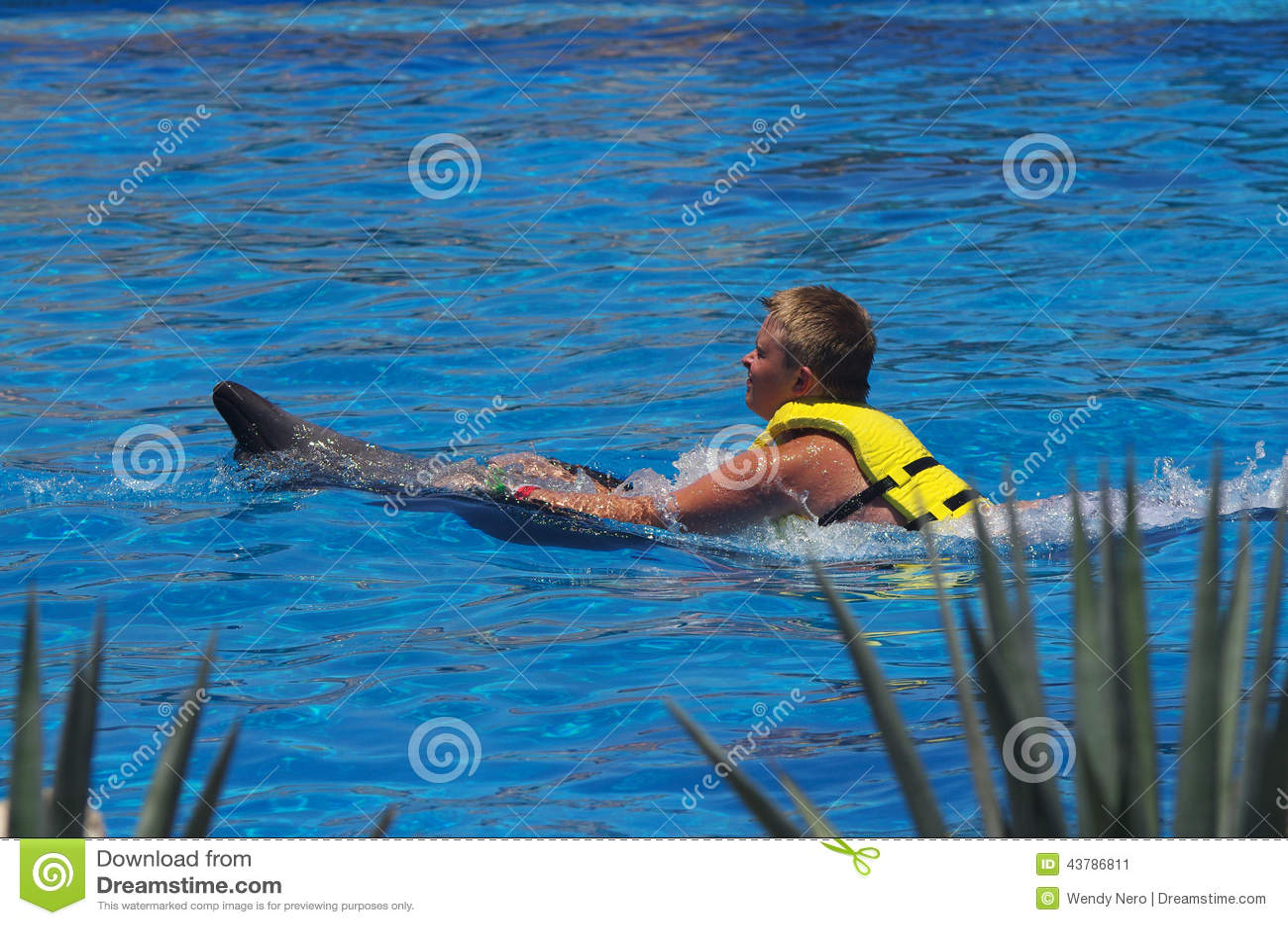 Pływać delfinów
