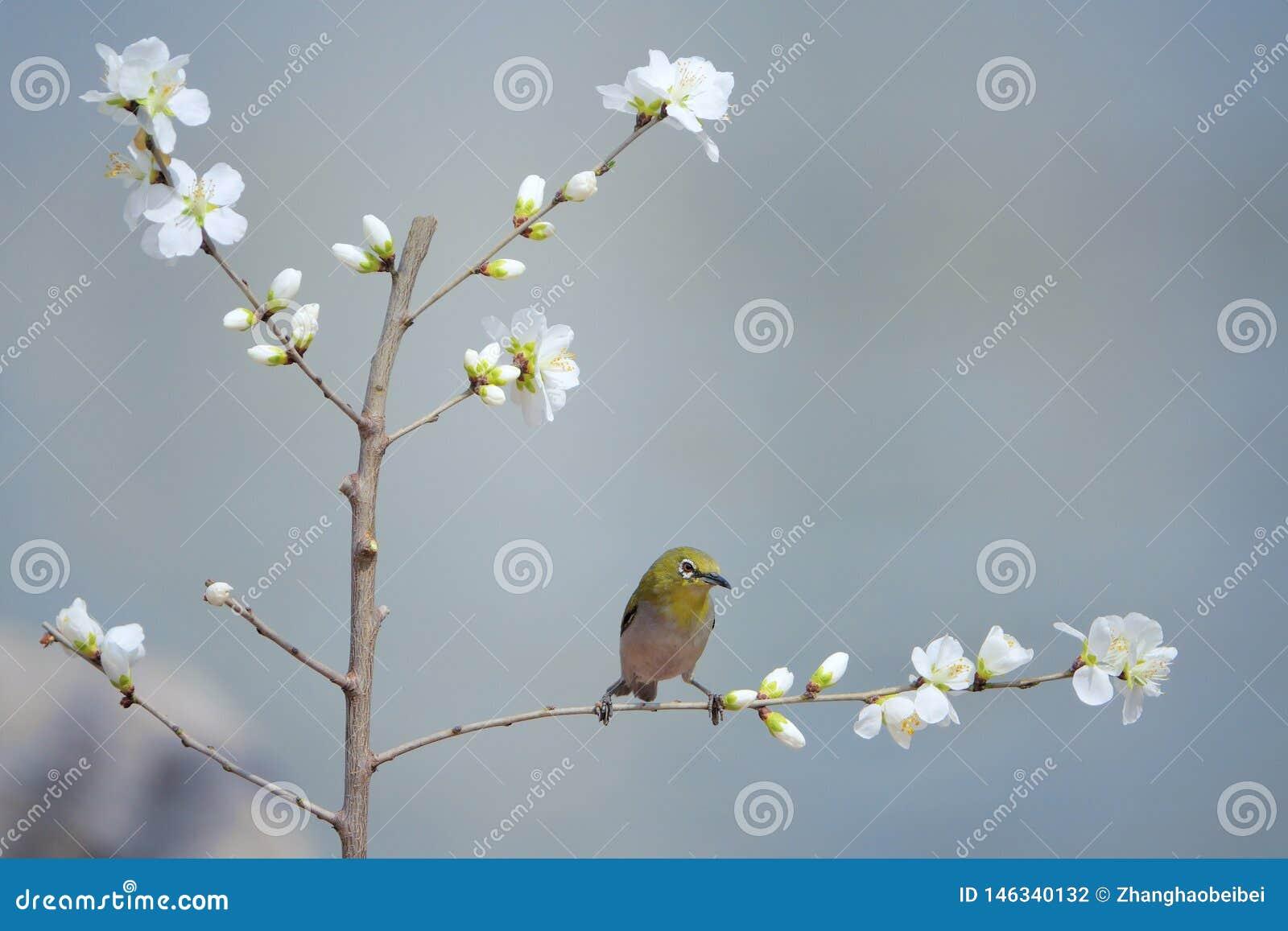 P?jaro y flor