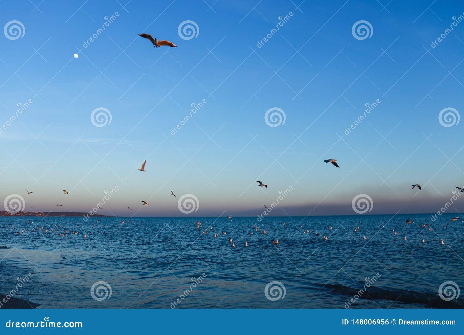 P?jaros en el mar