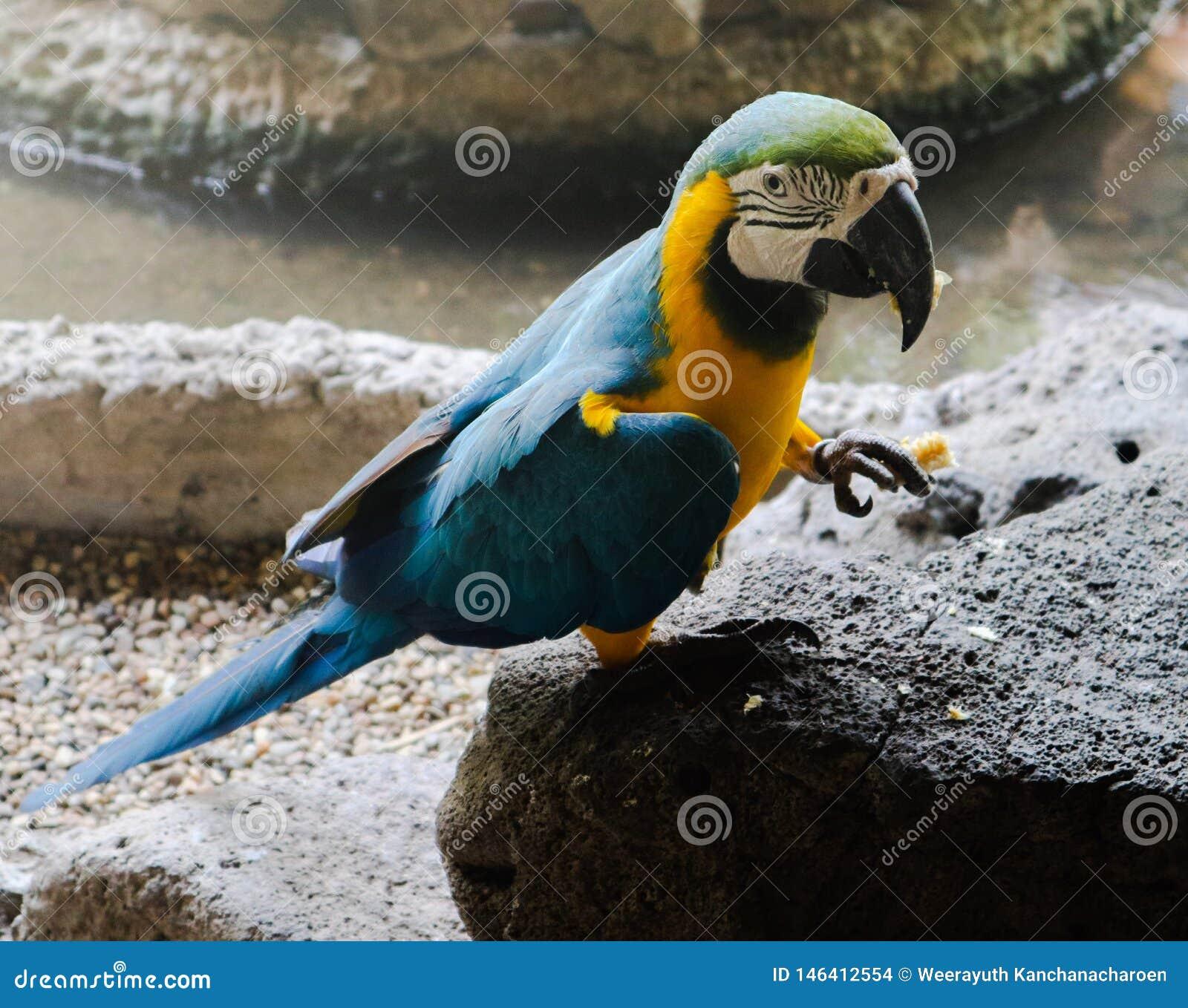 P?jaros hermosos del Macaw y del loro del primer en los parques p?blicos