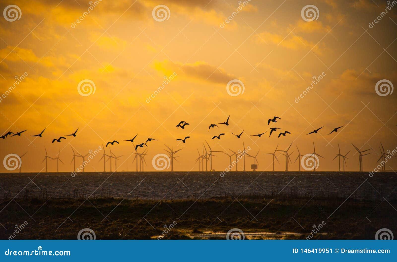 P?ssaros que voam sobre moinhos de vento