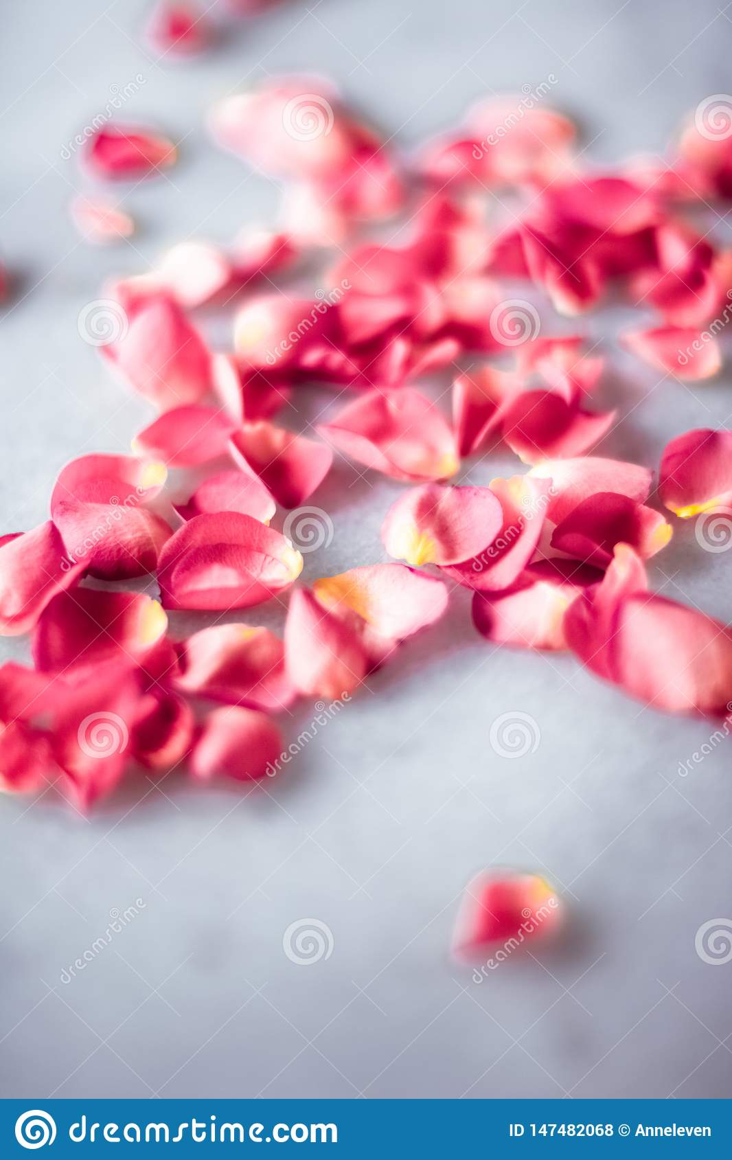 P?talas de Rosa na pedra de m?rmore, fundo floral