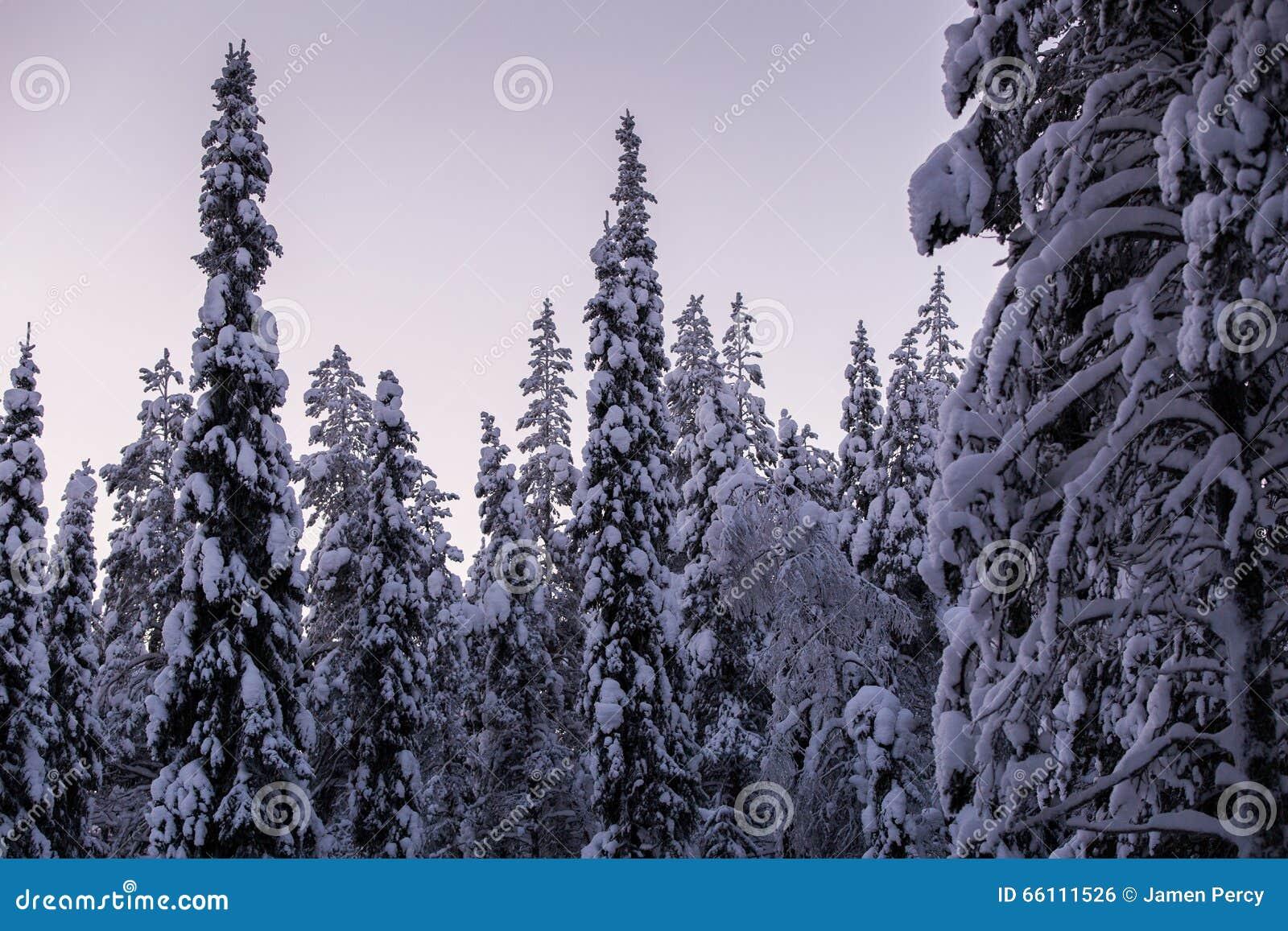 País de las maravillas del invierno en Laponia Finlandia