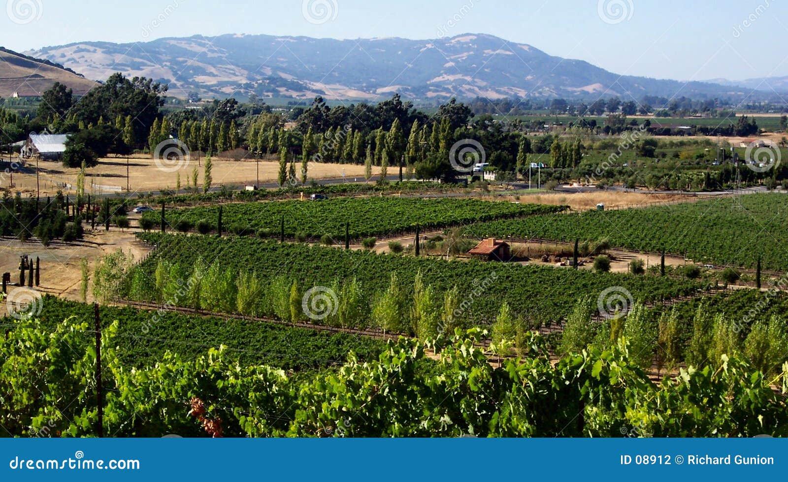 País de vino de California
