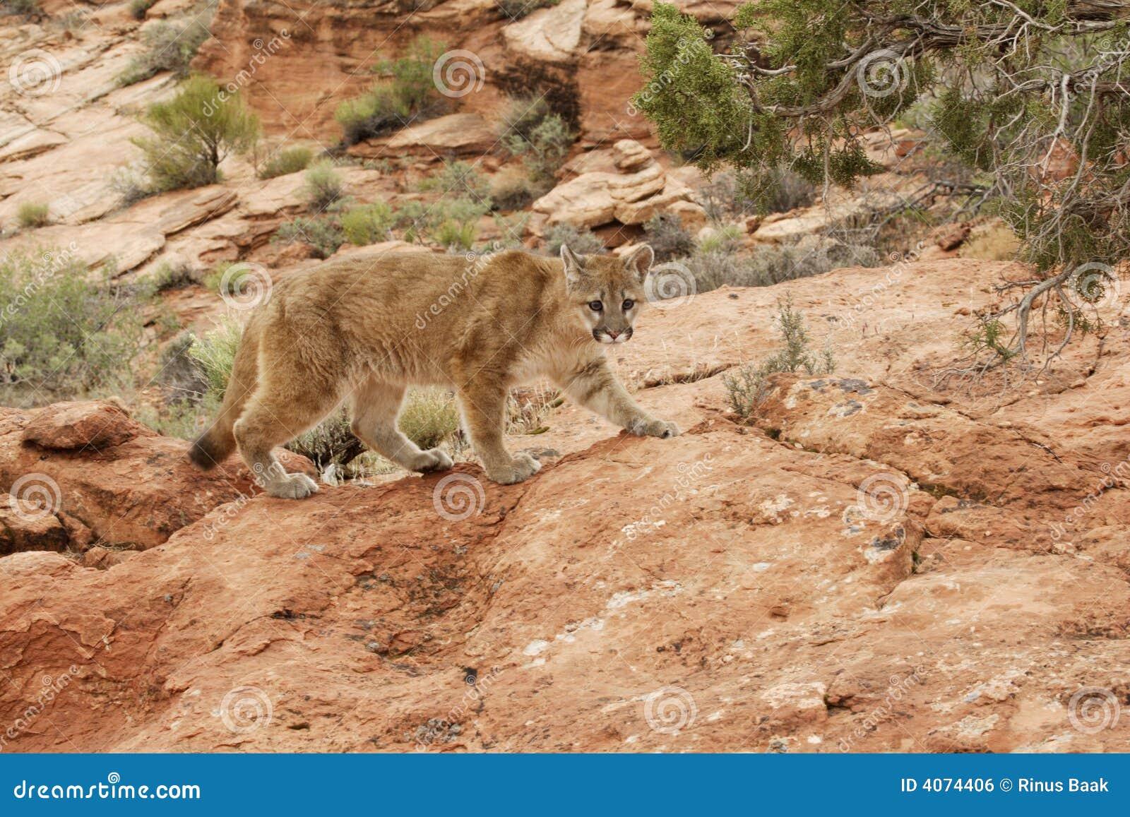 País vermelho da rocha do leão de montanha