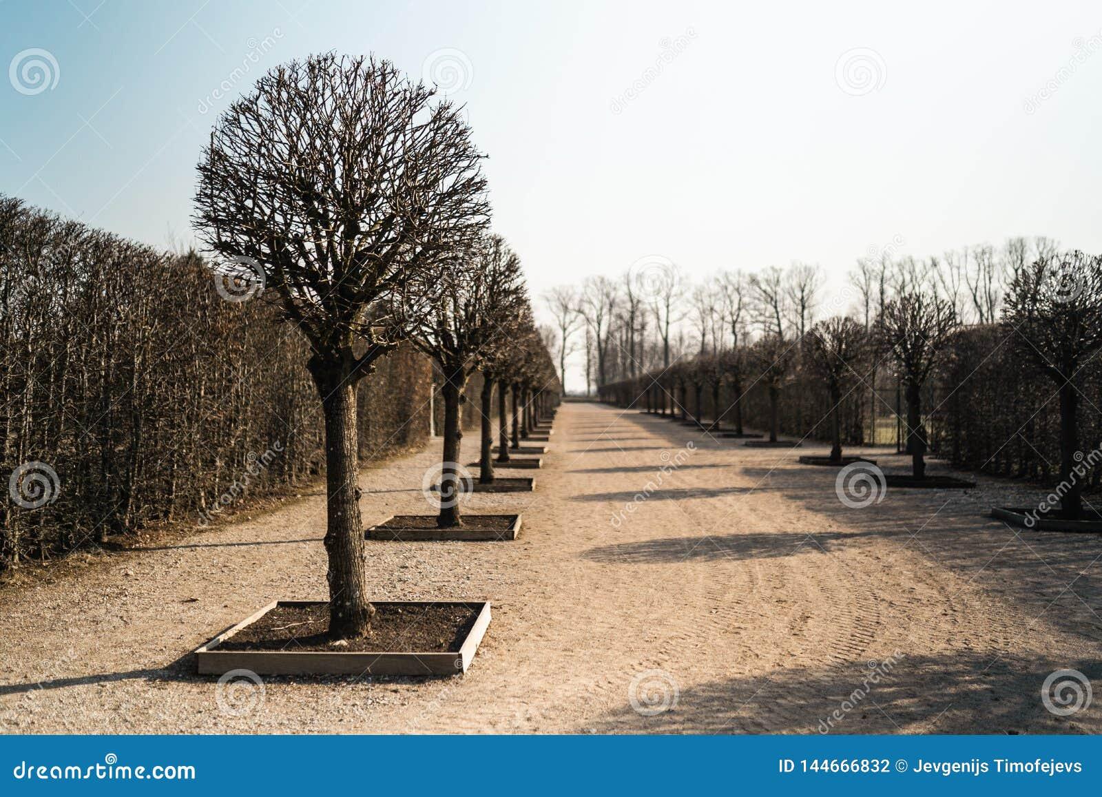 Pałac park w wiośnie z nagą drzewną aleją