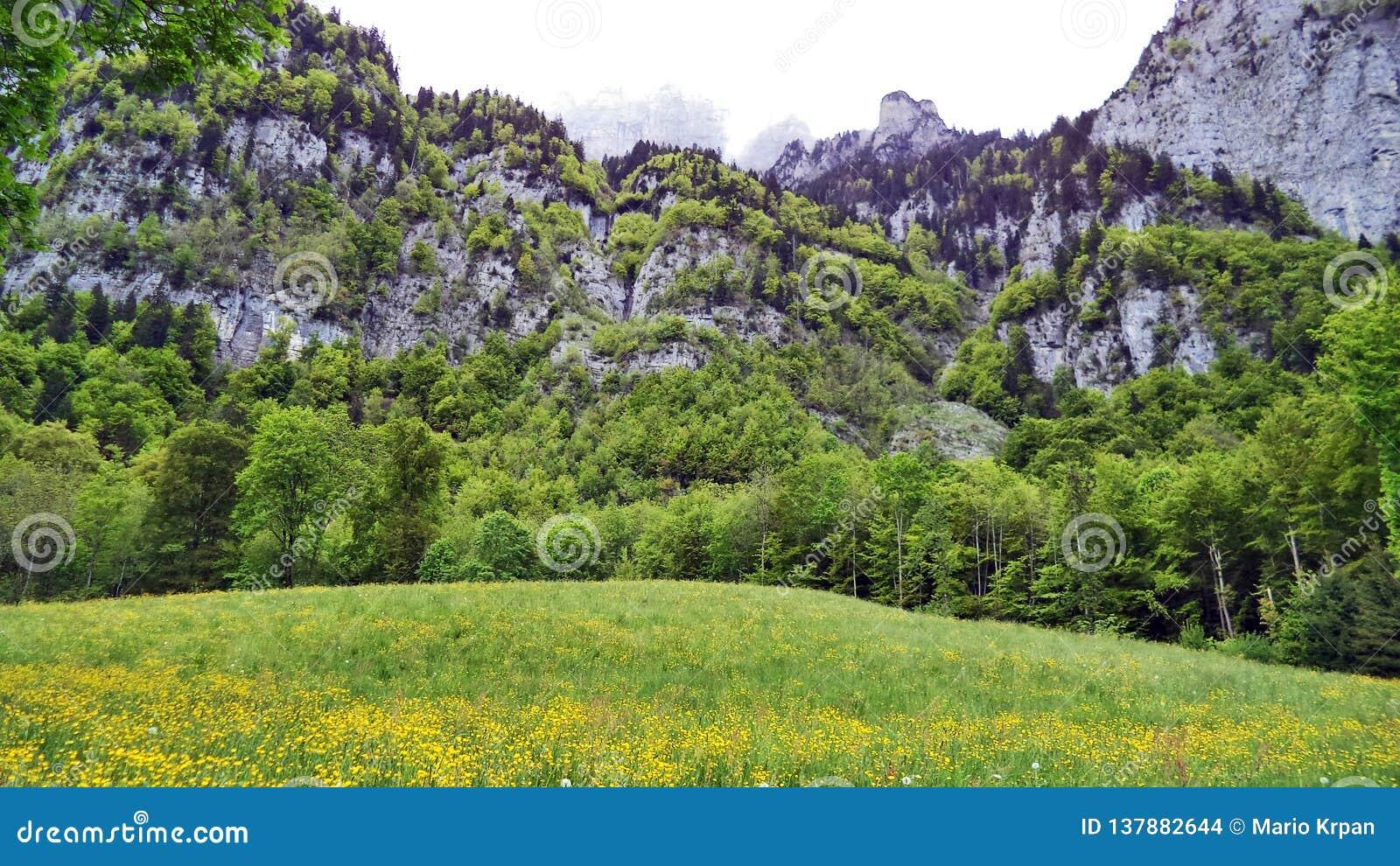 Paśniki i łąki między Churfirsten pasmem górskim Walensee jeziorem i