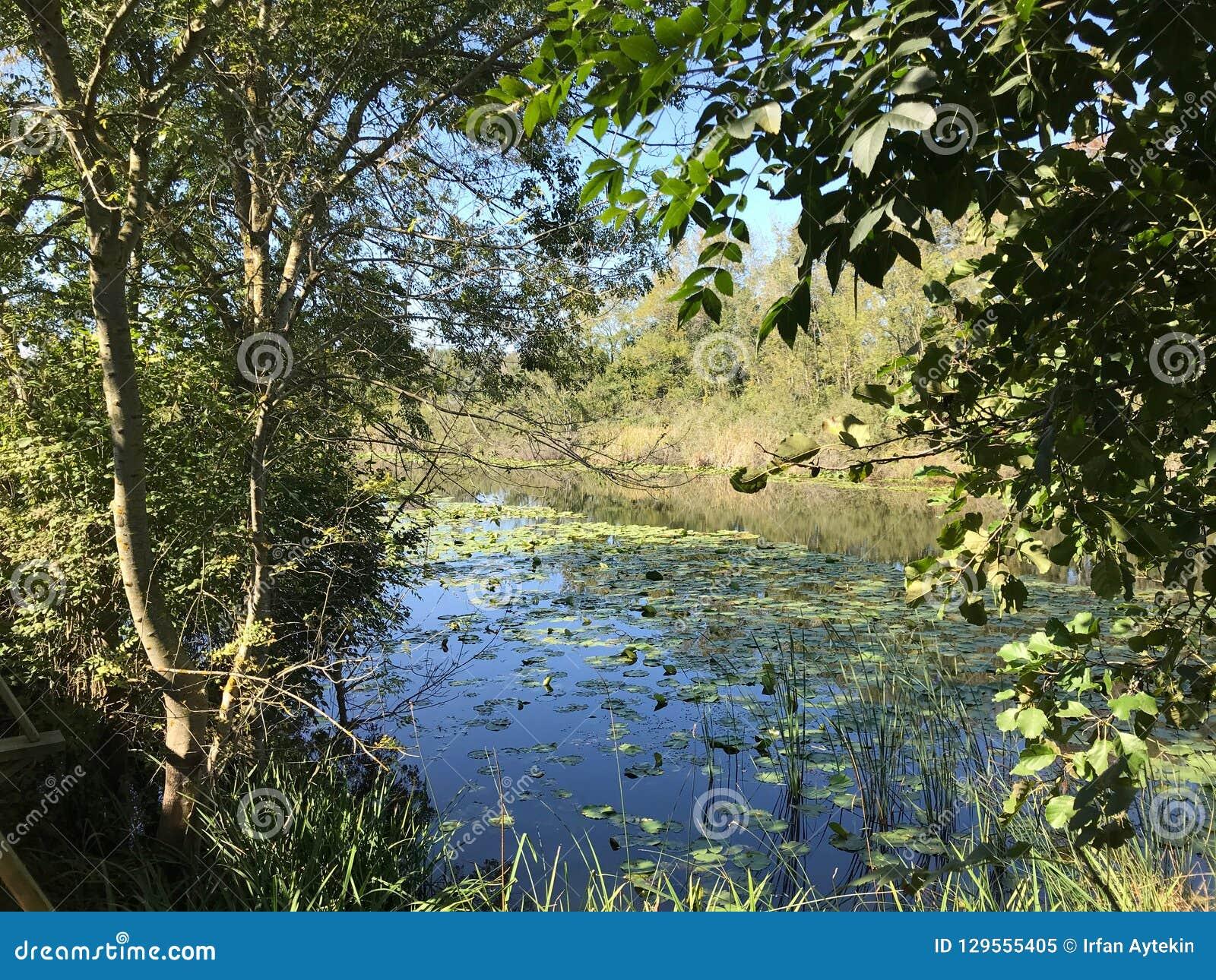 PAŹDZIERNIK 2018, Turcja bagna po drugie duży słodkowodny las: Acarlar w Sakarya, Turcja