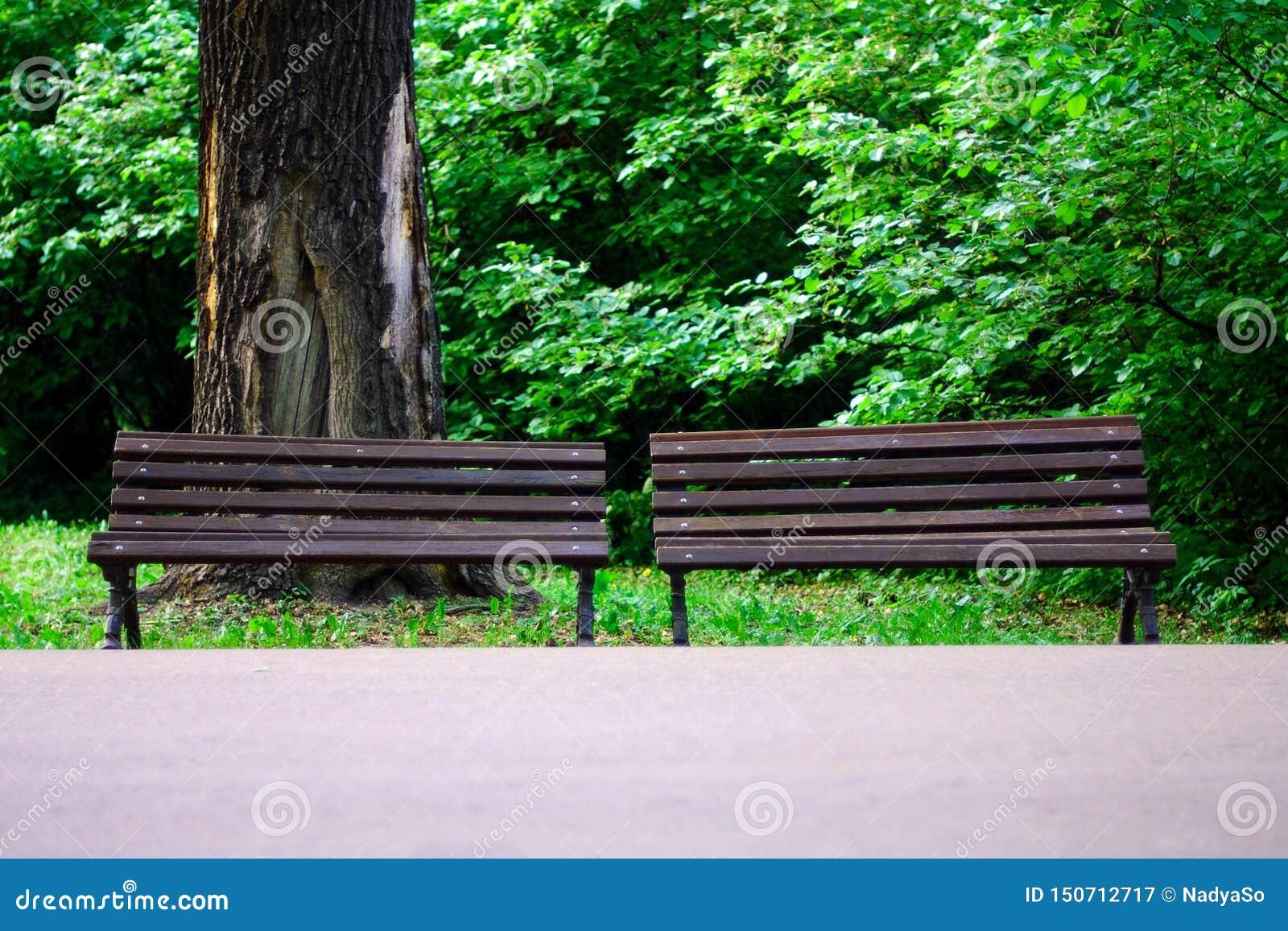 Paar bruine parkbanken tegen grote boomboomstam met hol