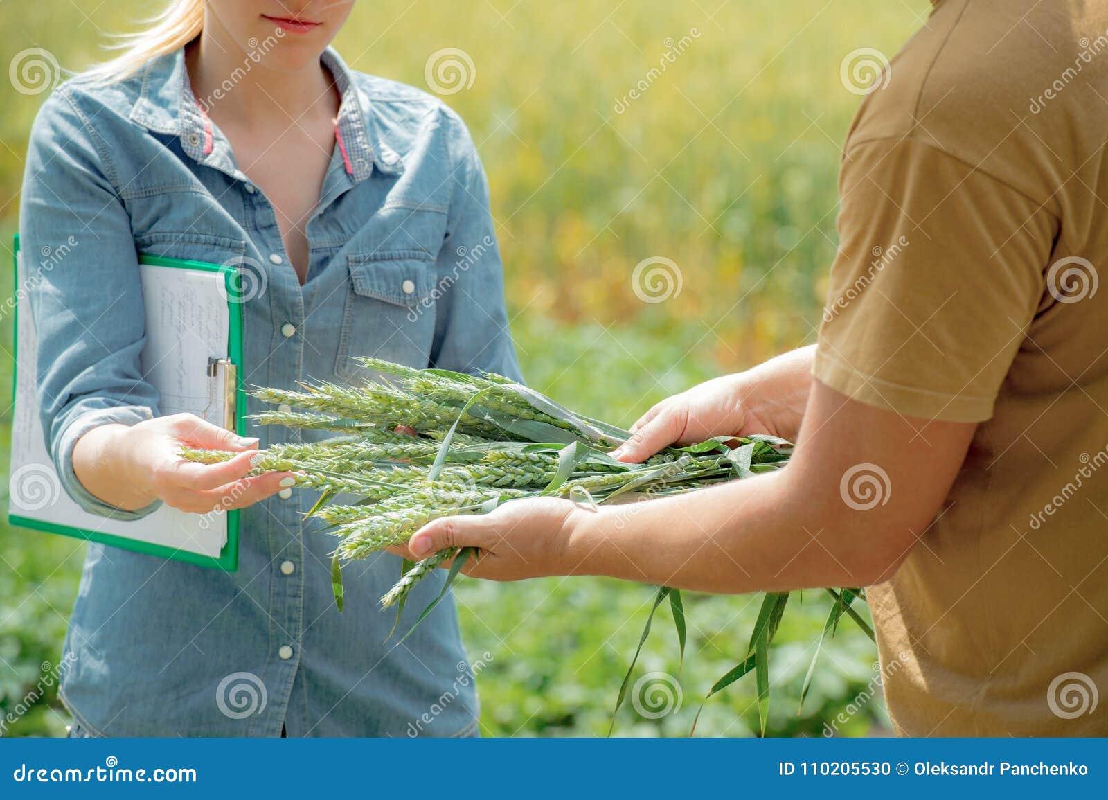 Paar van agronoom het onderhandelen over toekomstige oogst van tarwe,