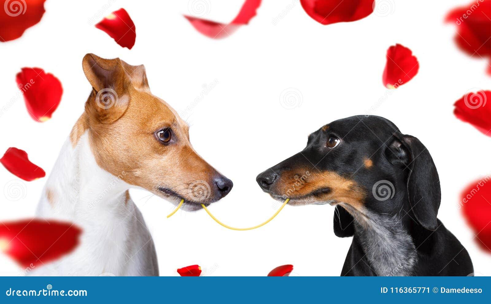 Paar van honden in liefde