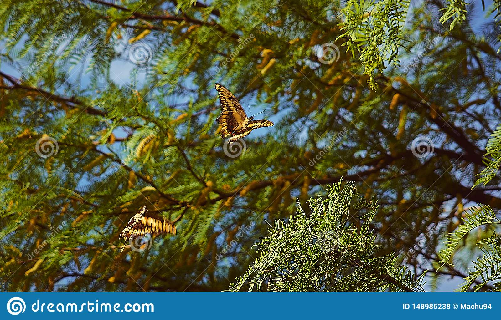 Paar van vlinders het vliegen