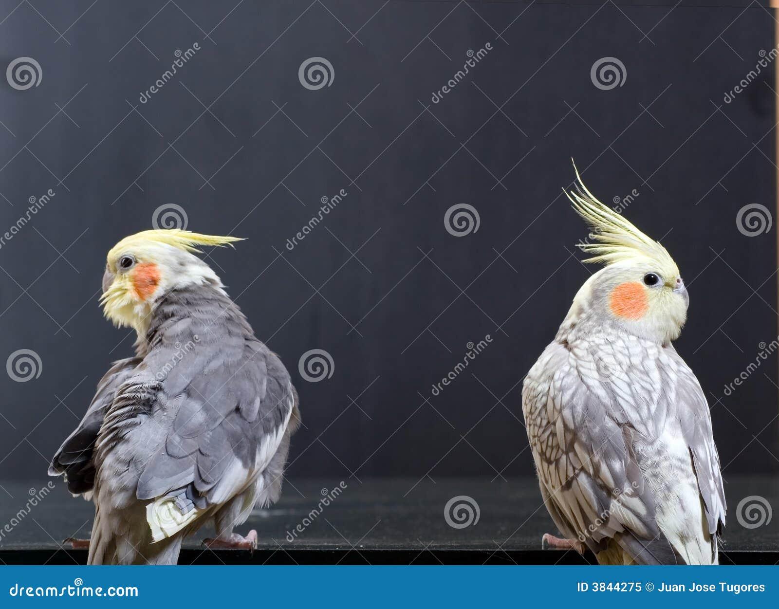Paar zeldzame vogels