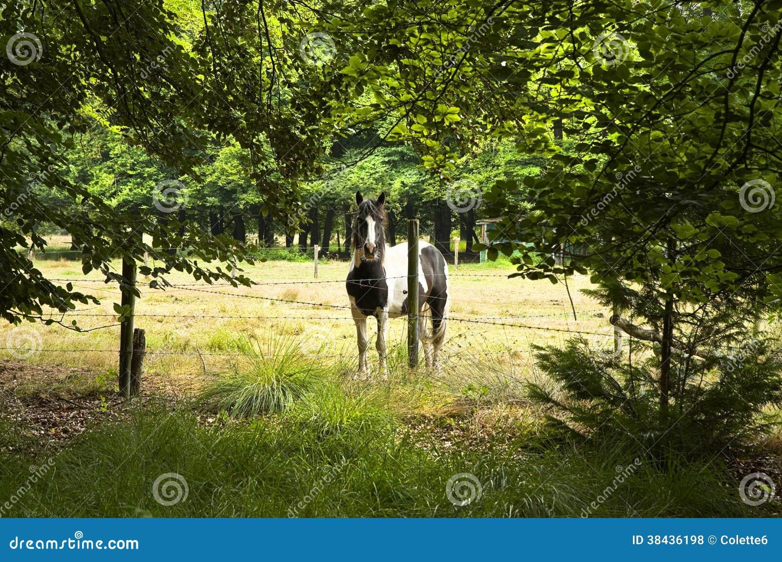 Paard achter omheining met weerhaken