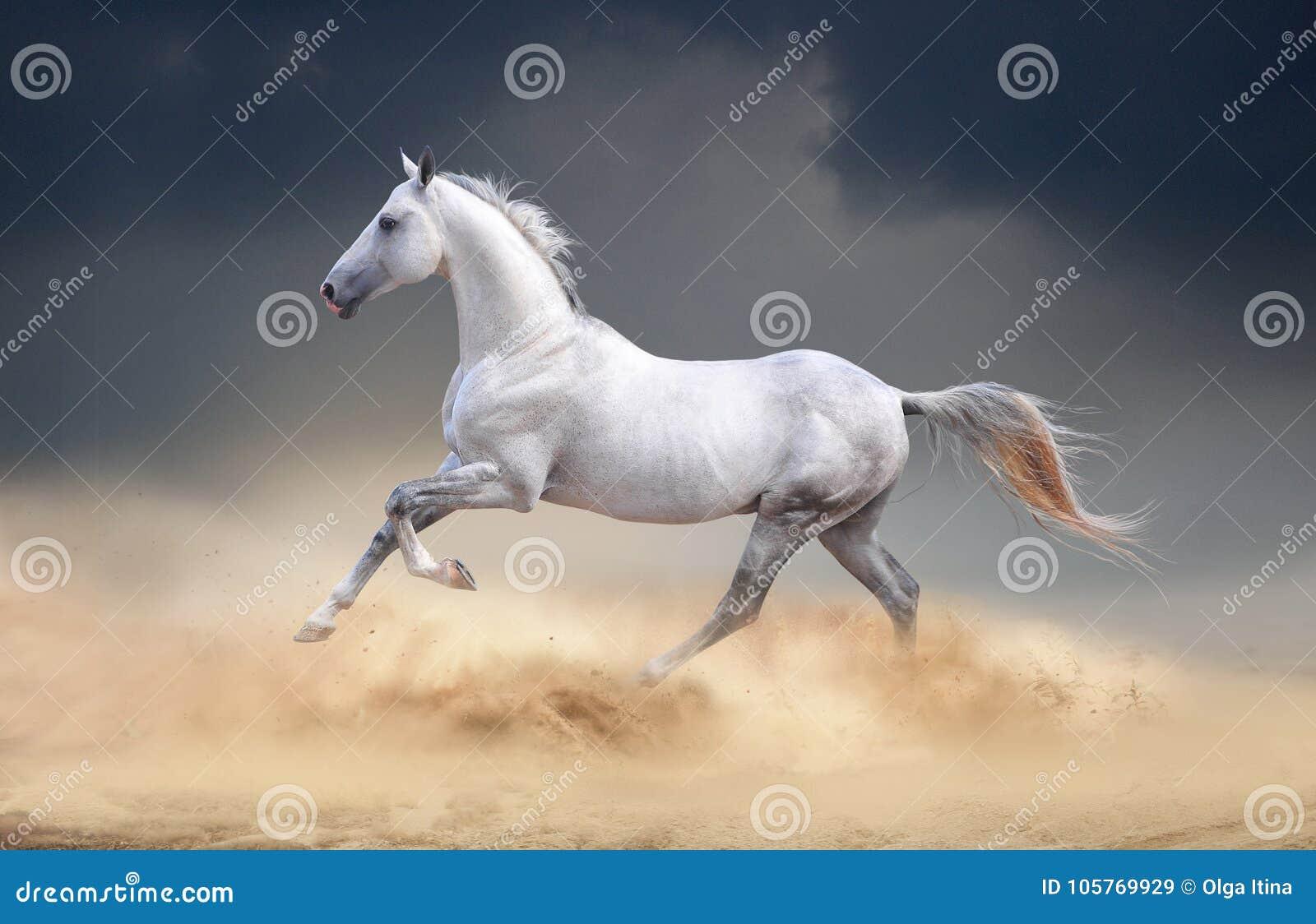 Paard Akhal die in woestijn lopen