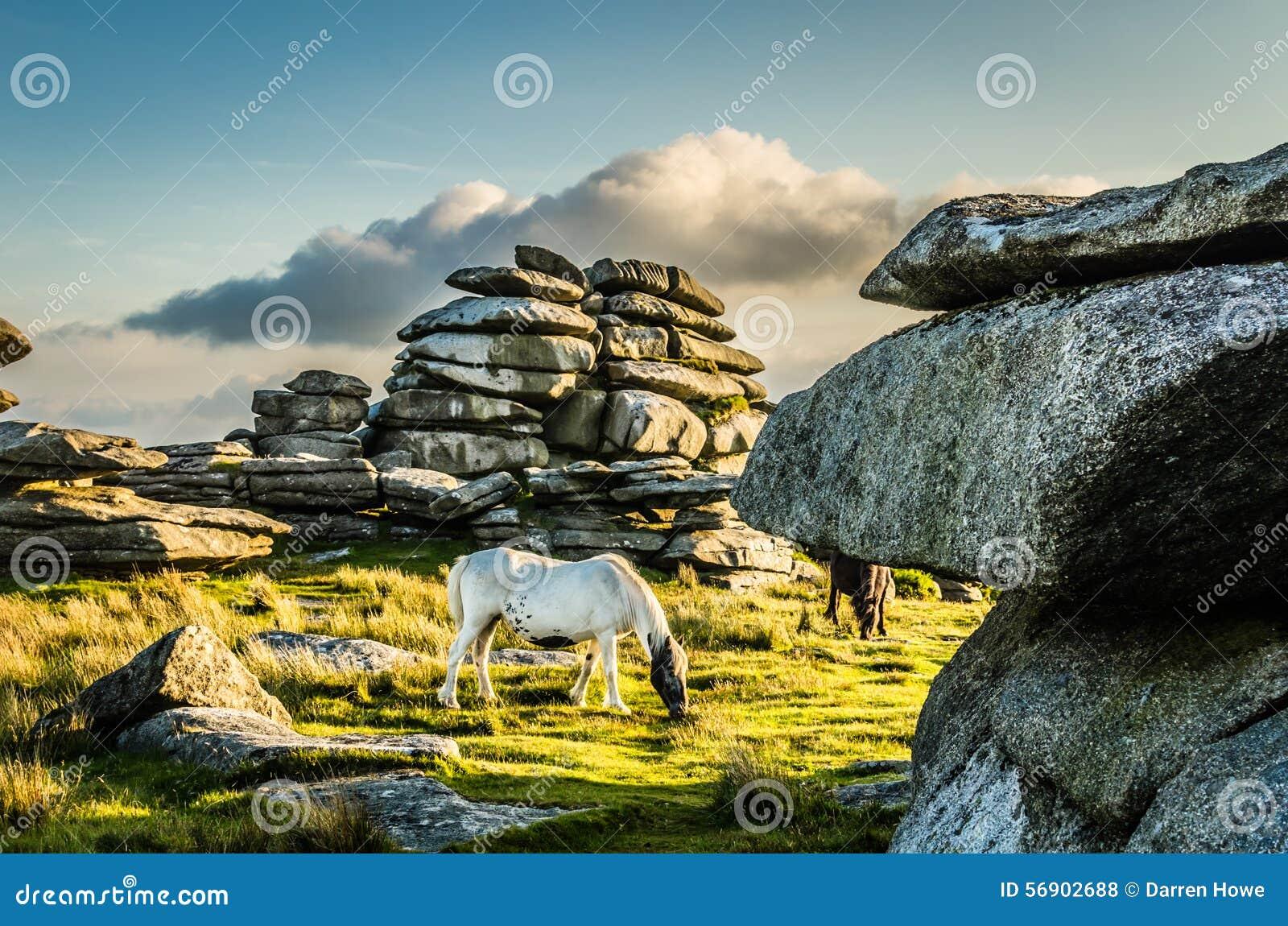 Paard bij Ruwe Piek