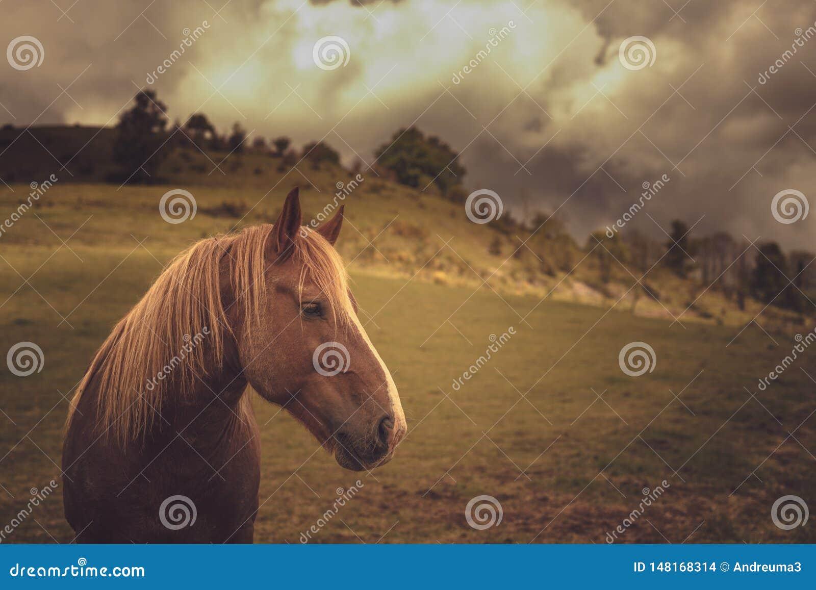 Paard in de aard