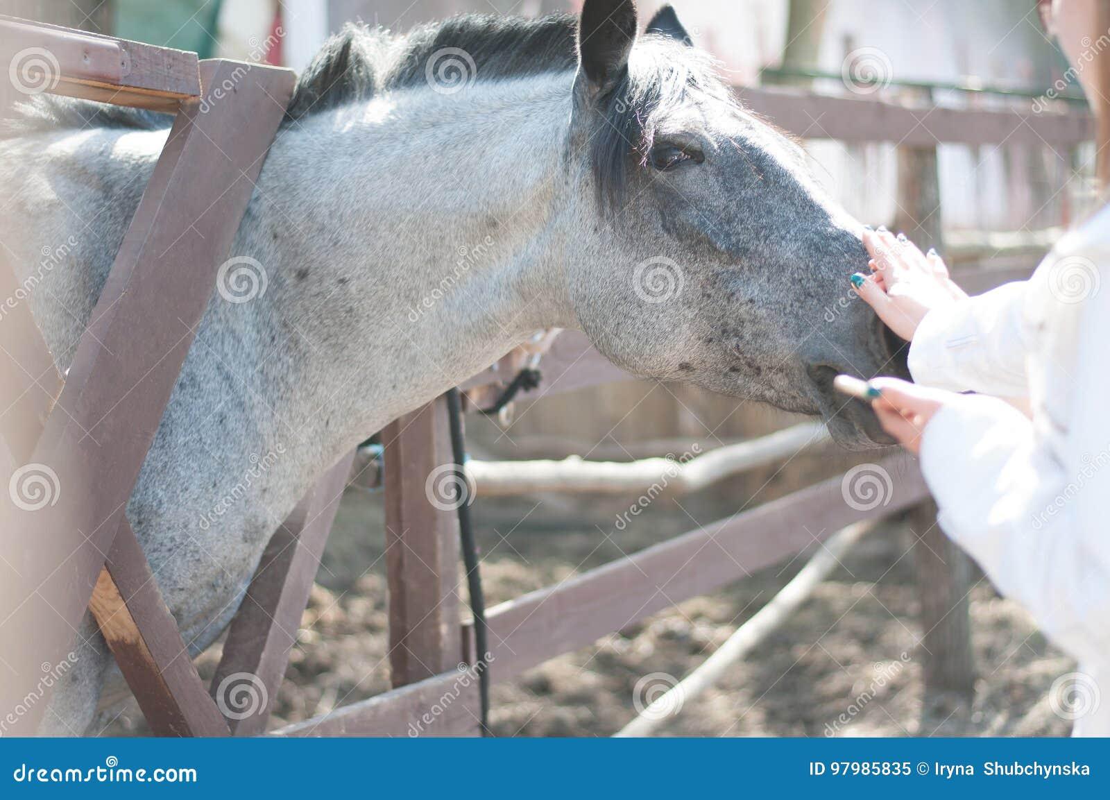 Paard in de dierentuin