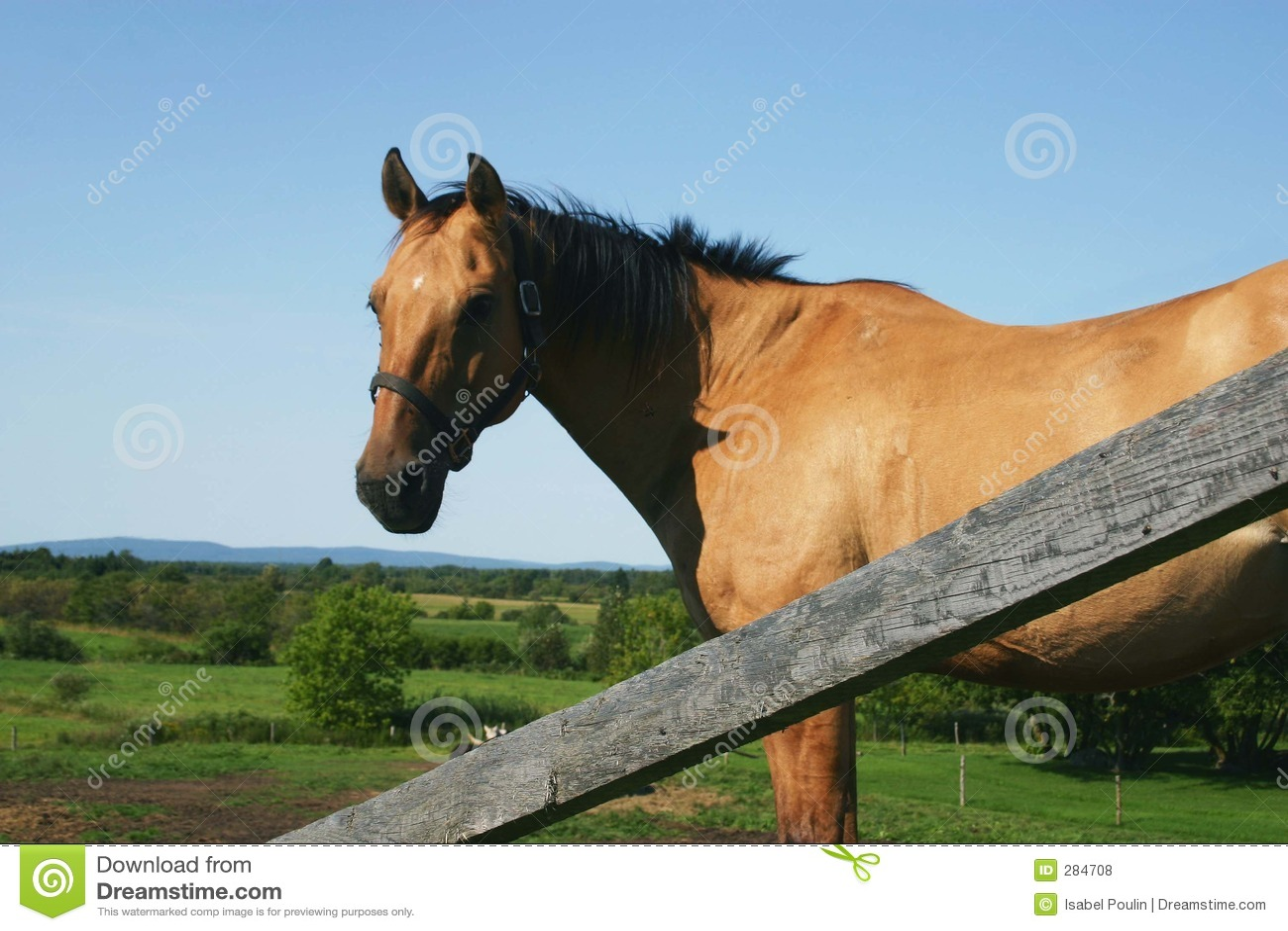 Paard in een blauwe hemel