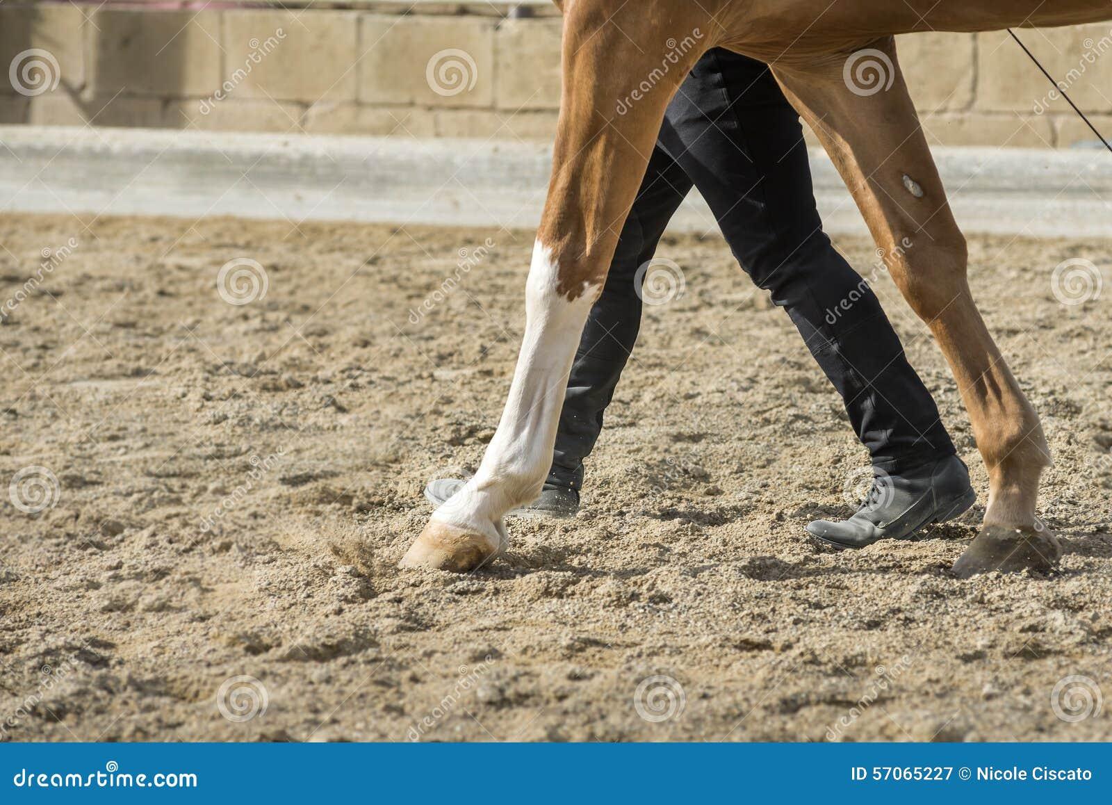 Paard en mensenverhouding