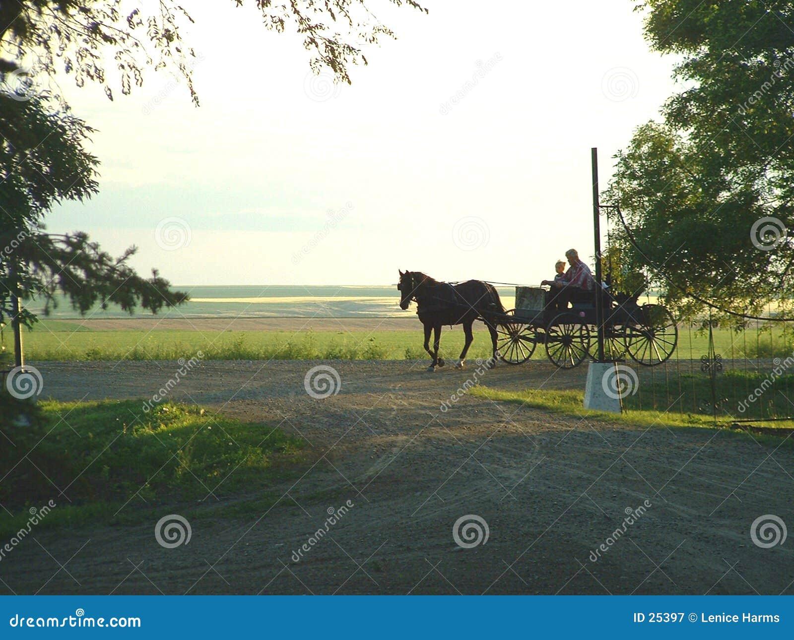 Paard en Met fouten
