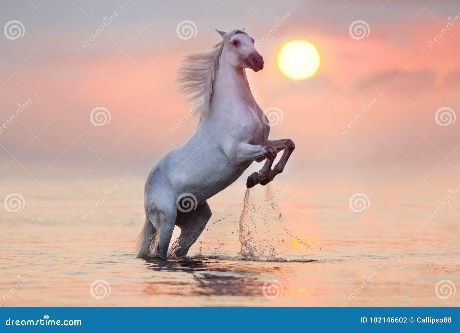 Paard het grootbrengen omhoog in water