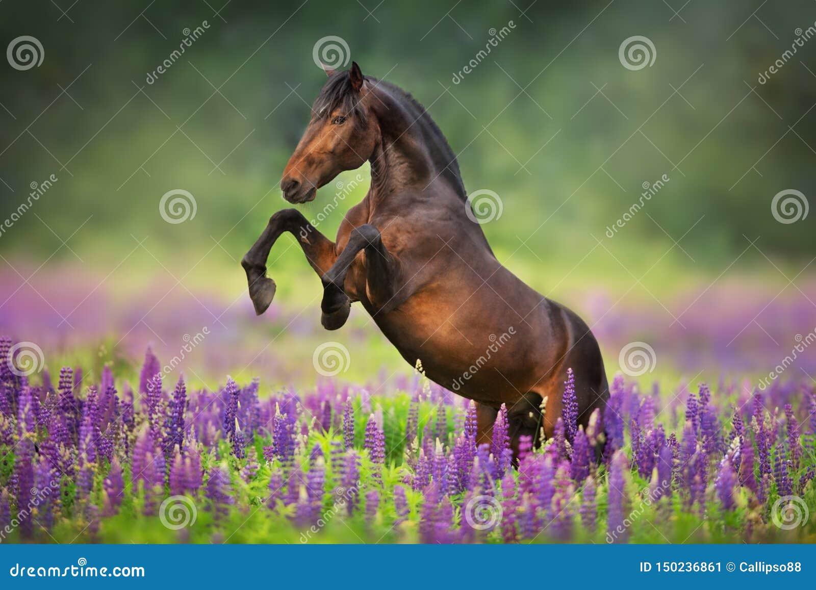 Paard in lupinebloemen