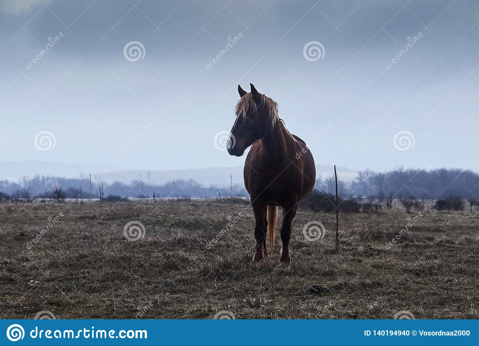 Paard in mist,